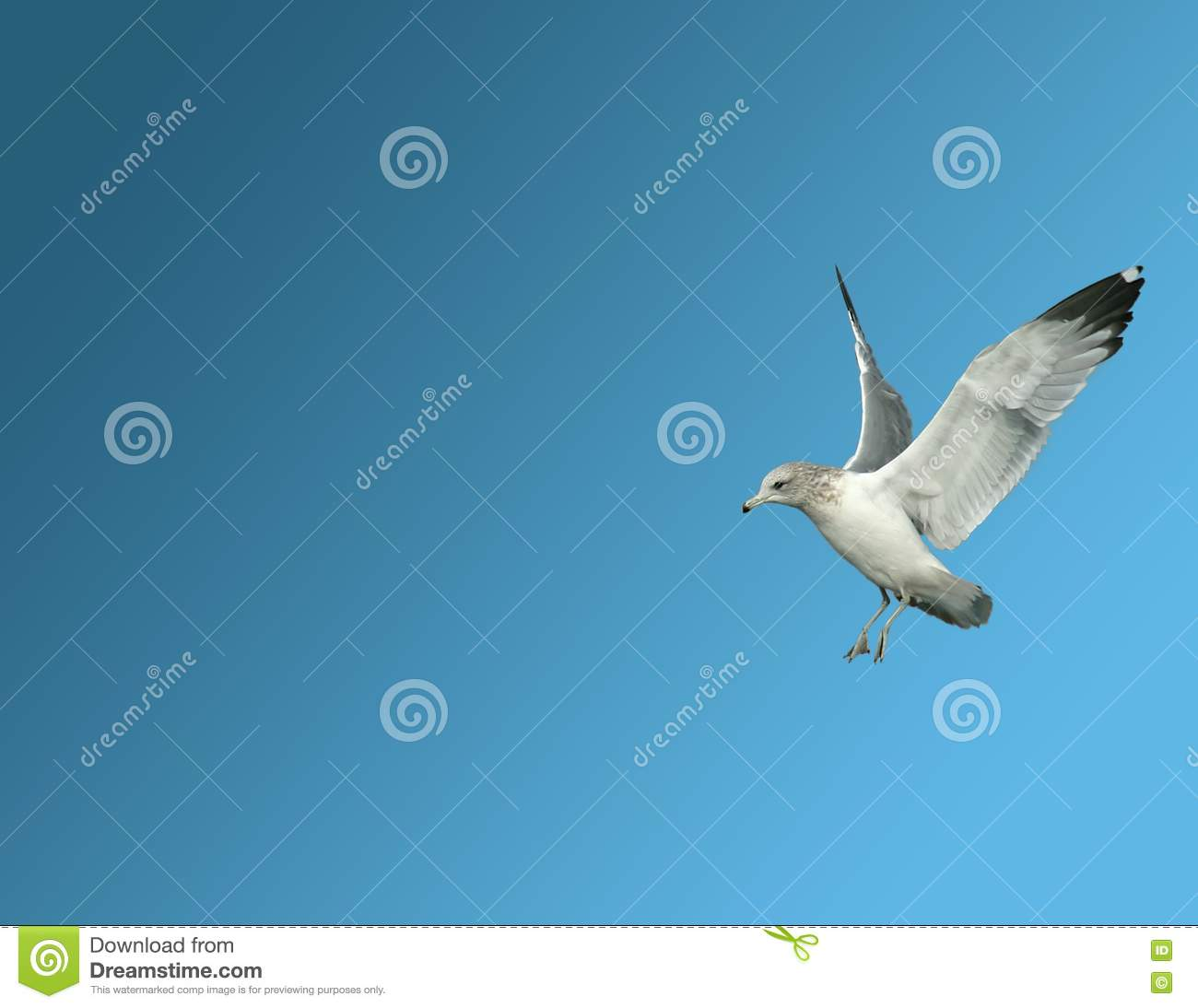 Seagull ready to land