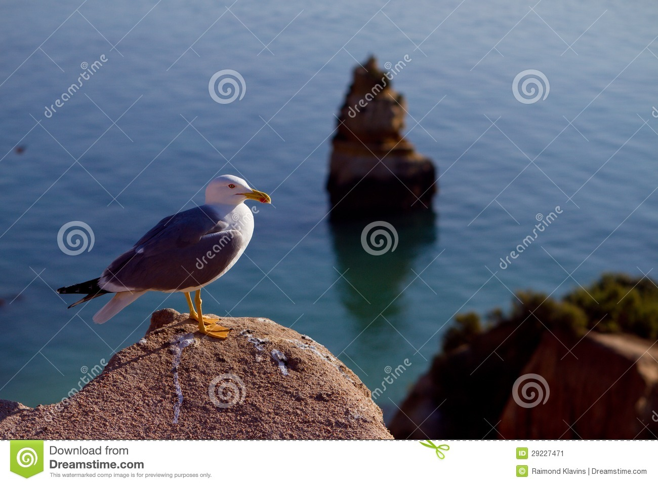 Seagull on the rock