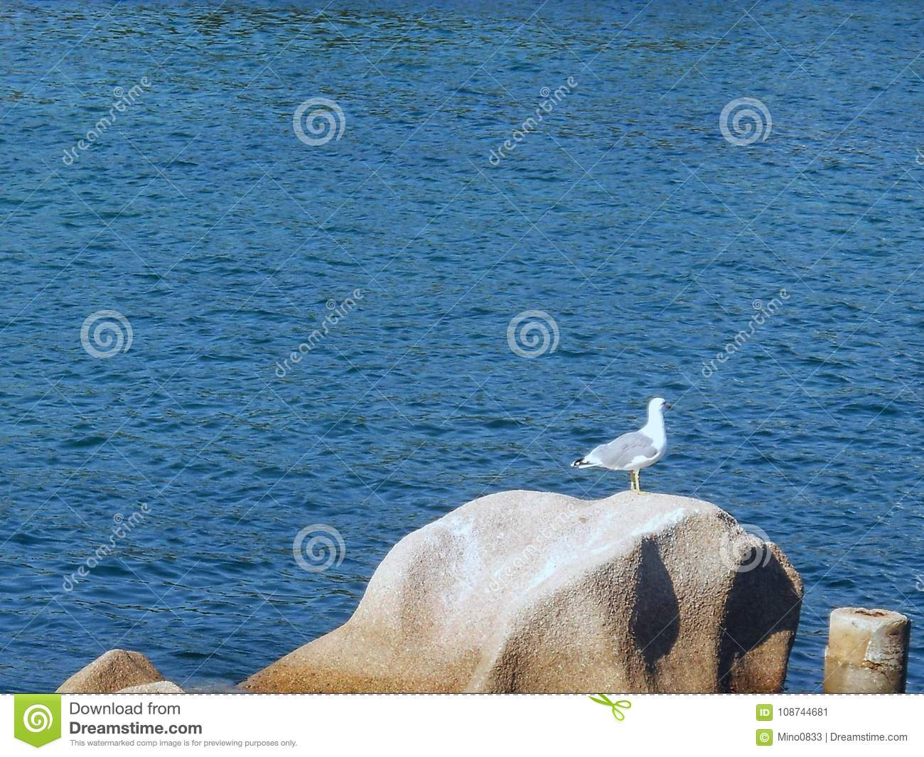 Beautiful Pictures Of Seagulls Large And Free To Use As Desktop Backgrounds Background Photos Wallpapers Screensaver