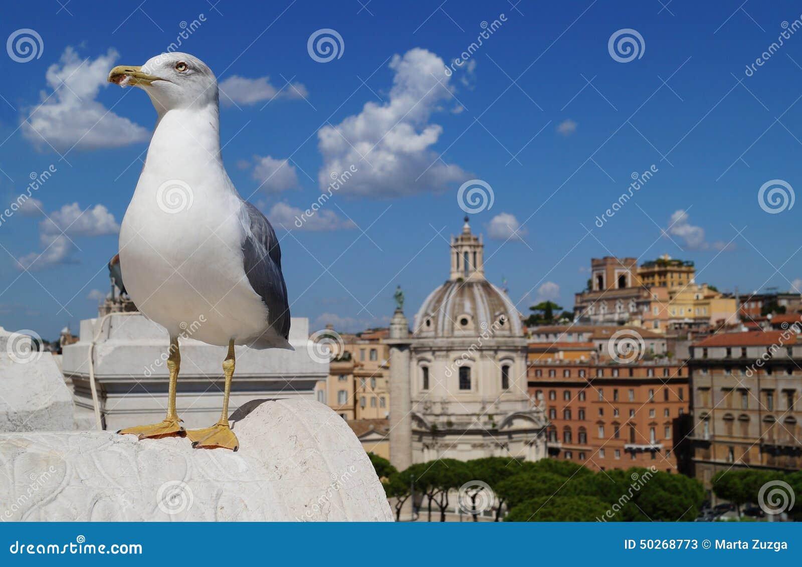 Seagull in Rome.