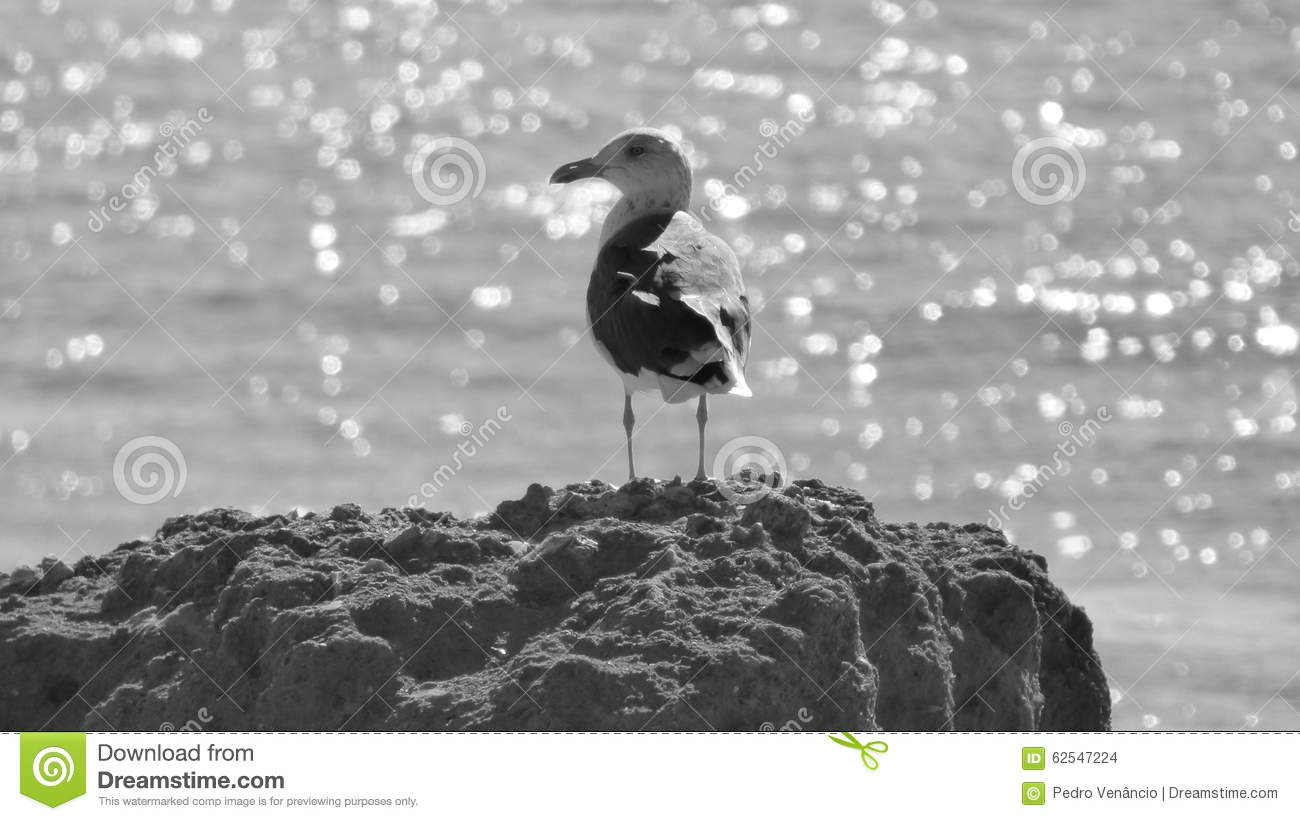Seagull and the Sea