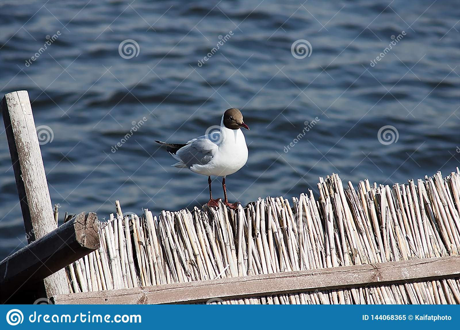 A seagull is sitting on the fence on the background of water