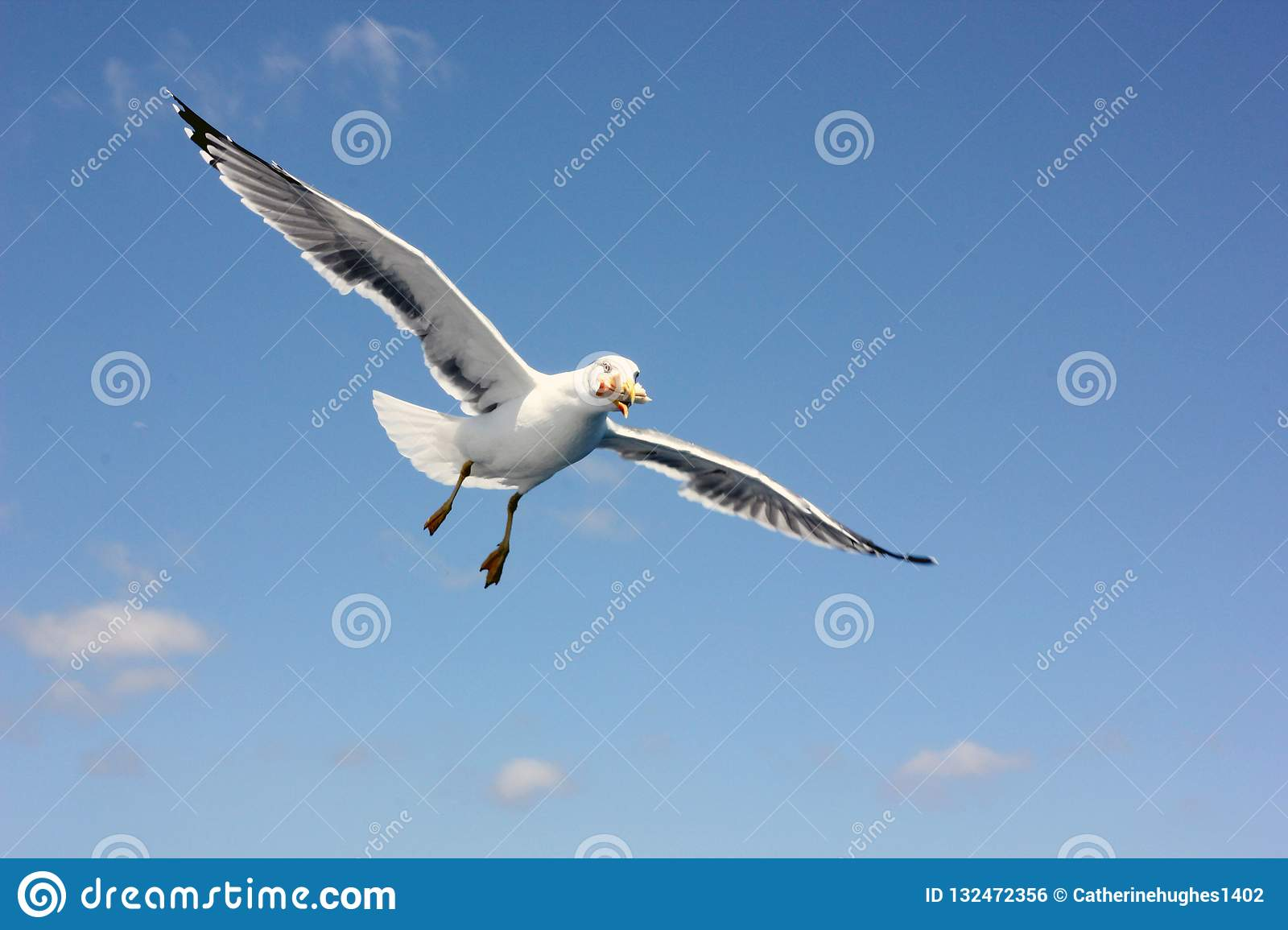 Flying seagull eating a sandwich