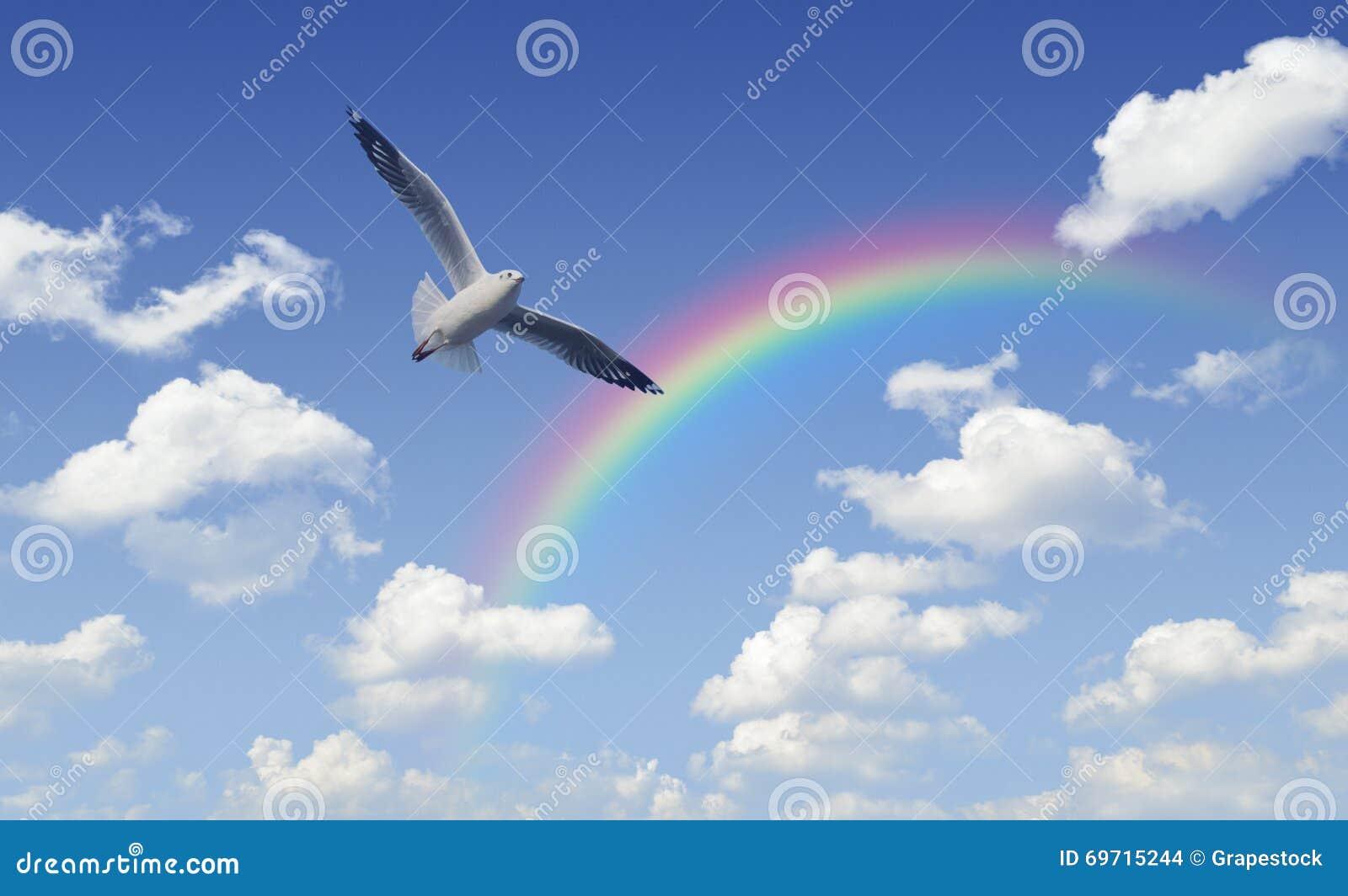 Seagull som flyger över regnbågen med vitmoln och blå himmel som är fria