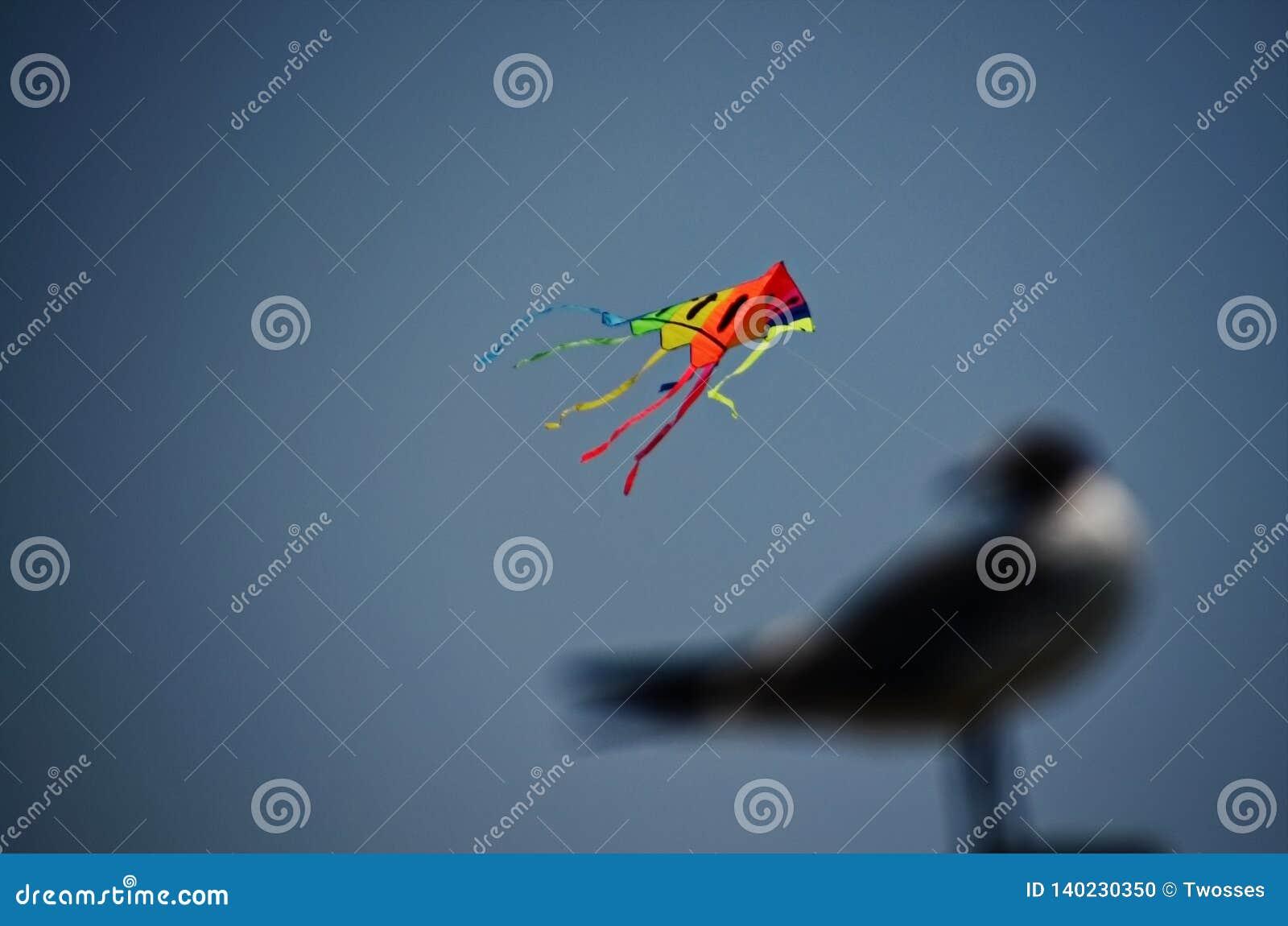 Seagull som flyger en drake