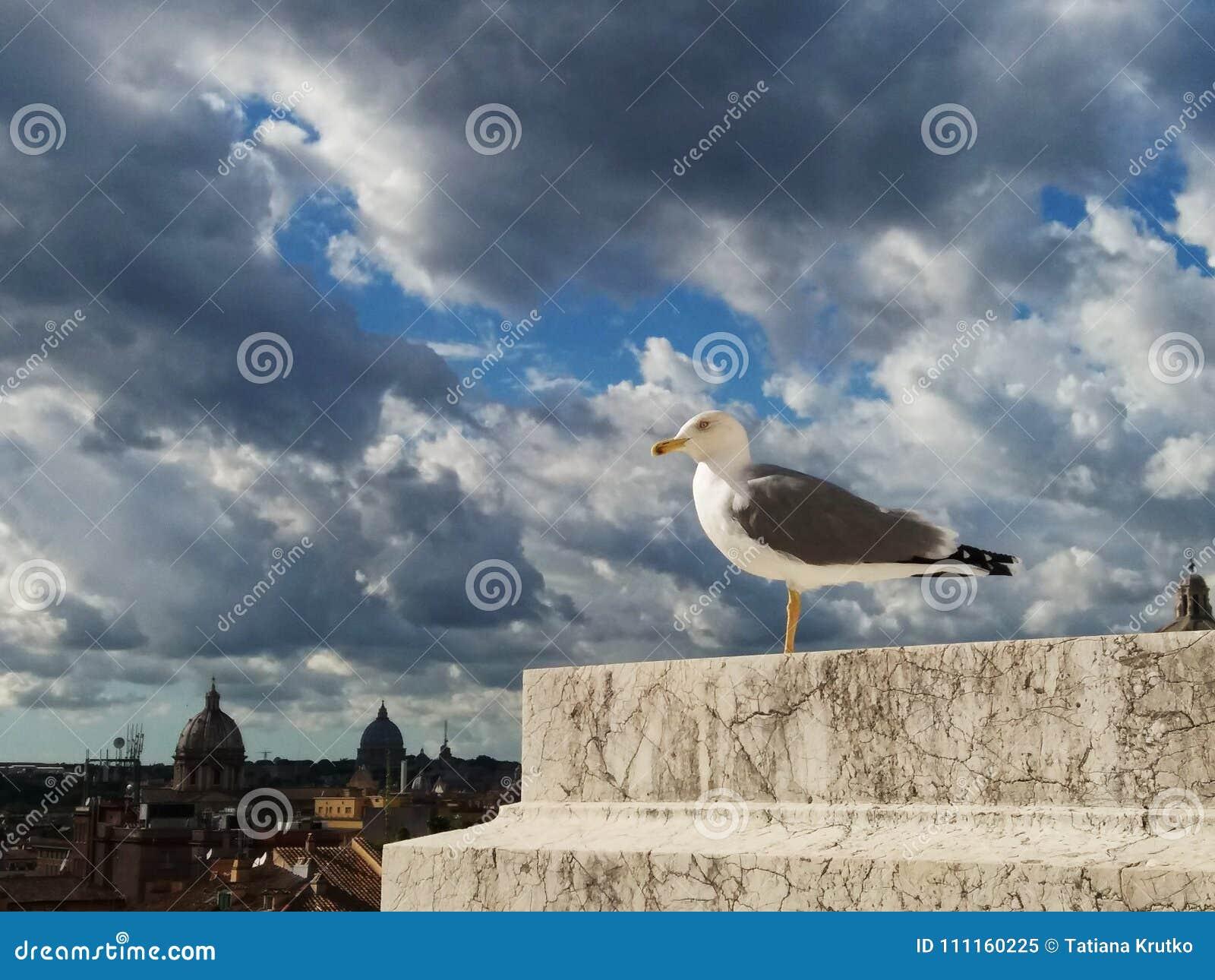 Seagull w Rzym przeciw niebu