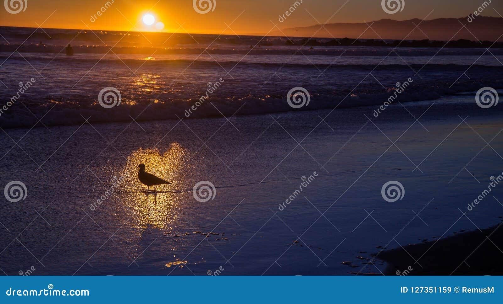 Seagull w złocistym odruchu przelotna woda