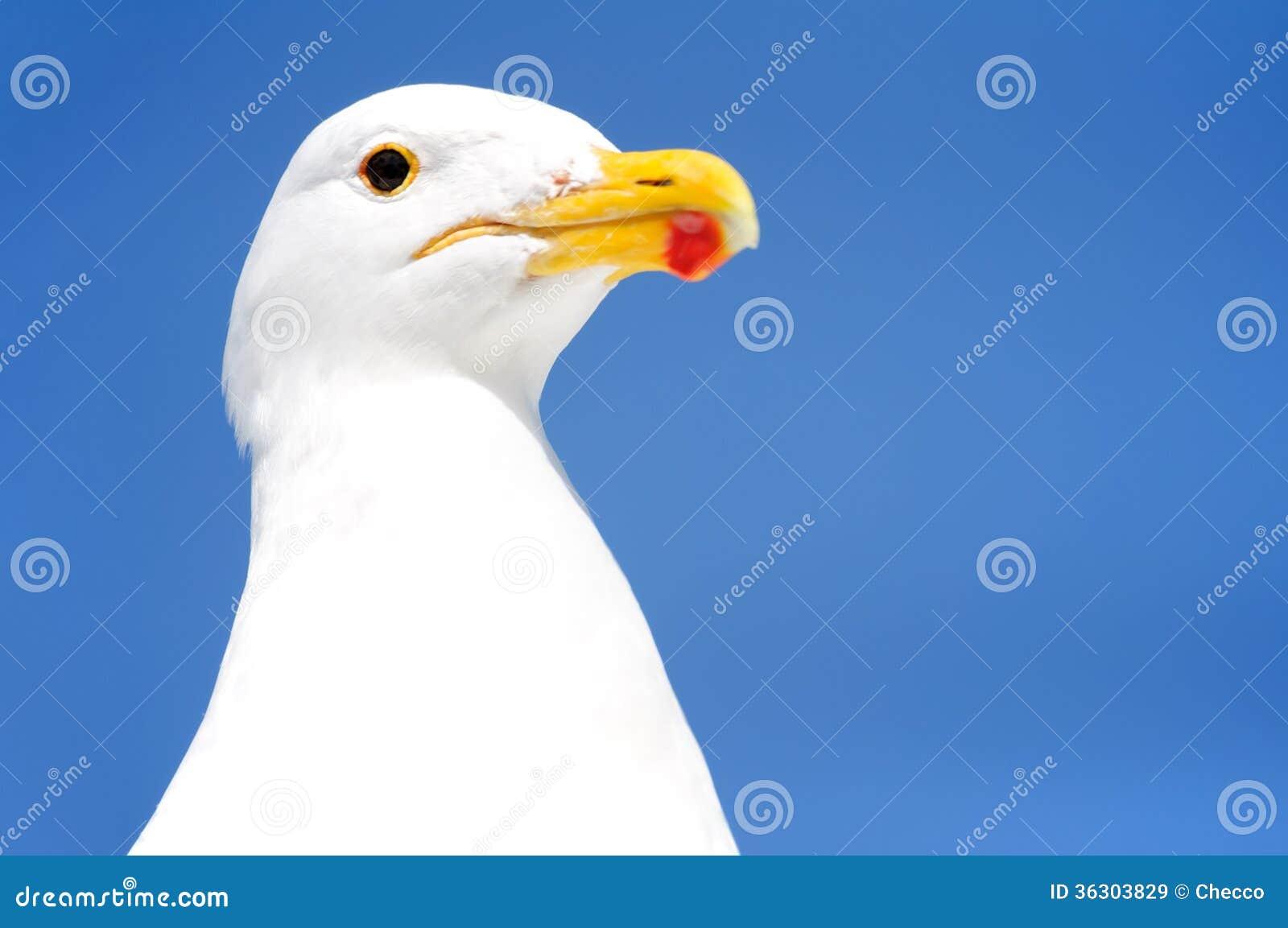Seagull in Walvis Bay