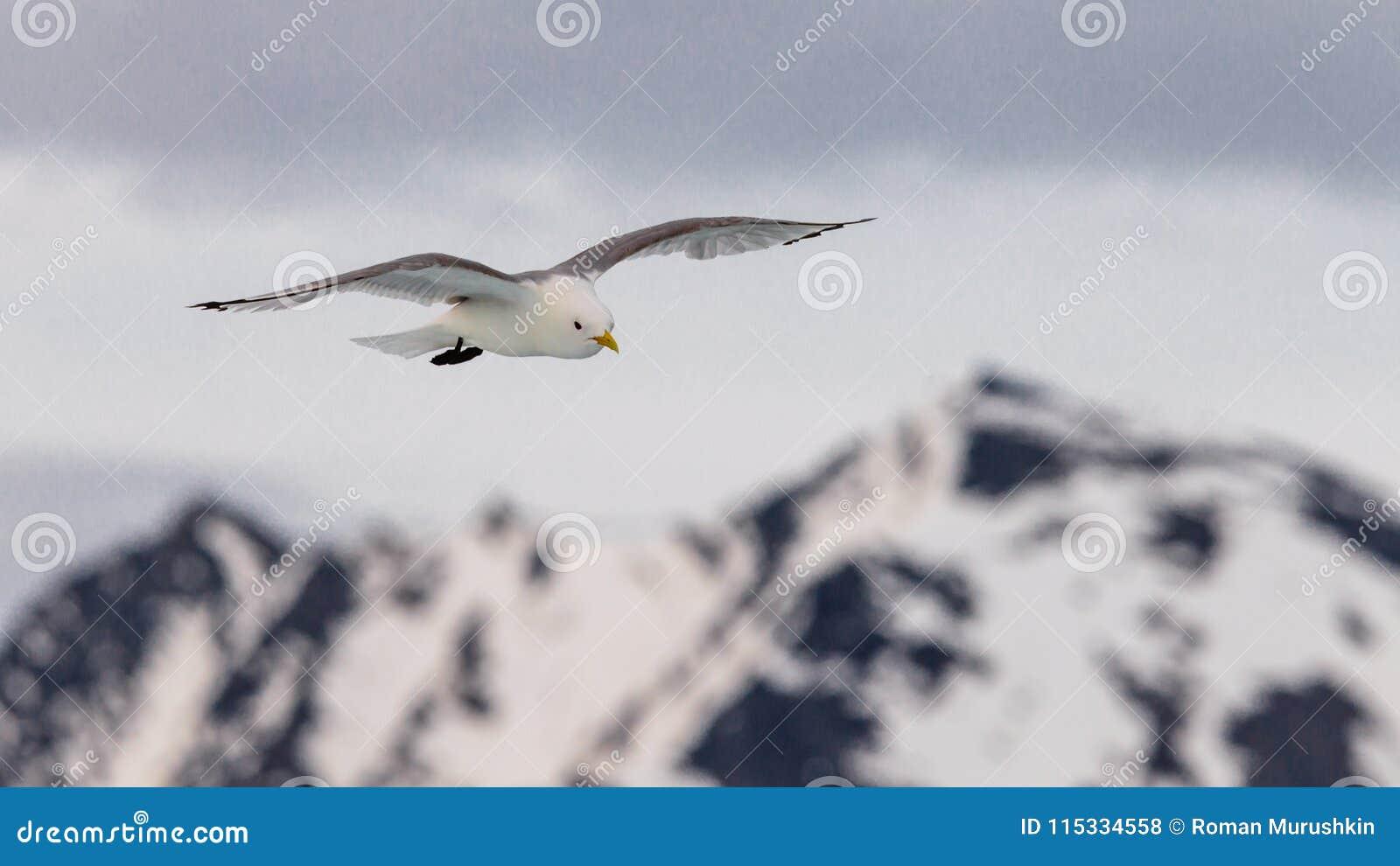 Seagull wznosi się w niebie