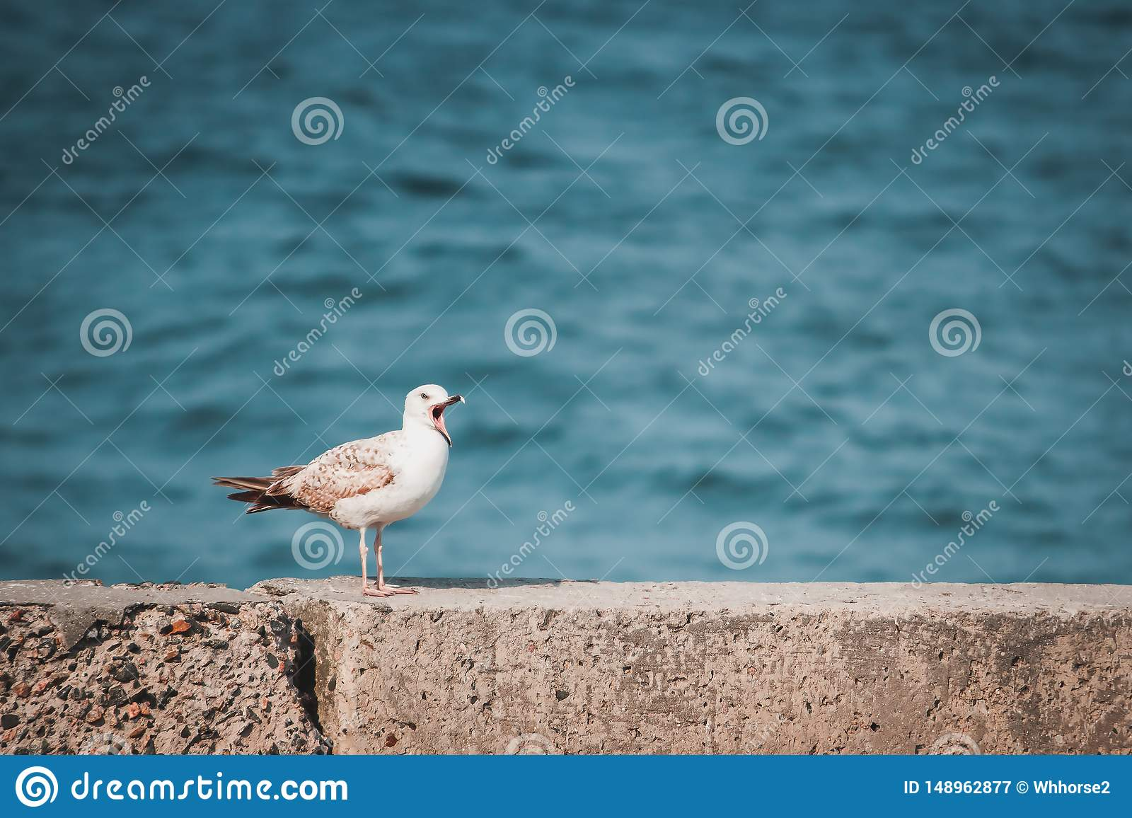 Seagull z otwartym belfrem siedzi na brzeg