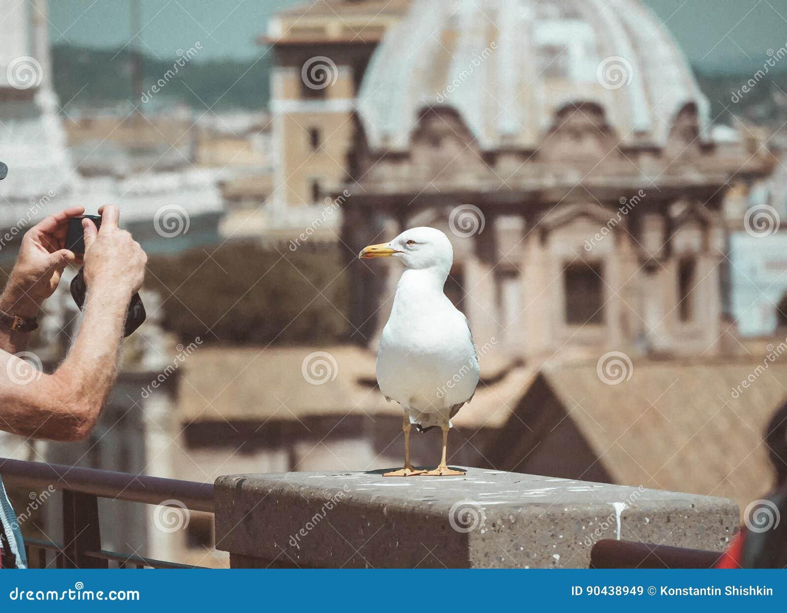 Seagullen står över taken i historisk mitt av Rome