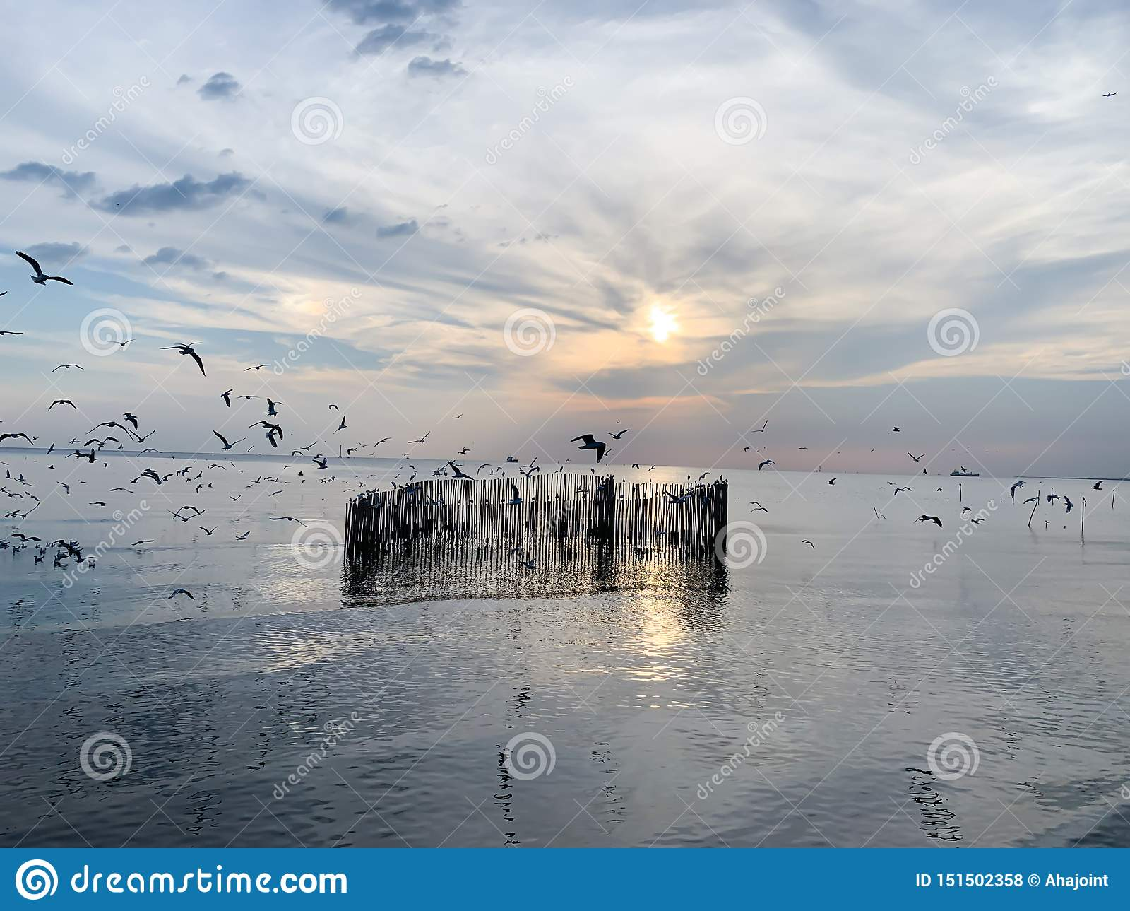Seagullhimmel och havsbakgrund