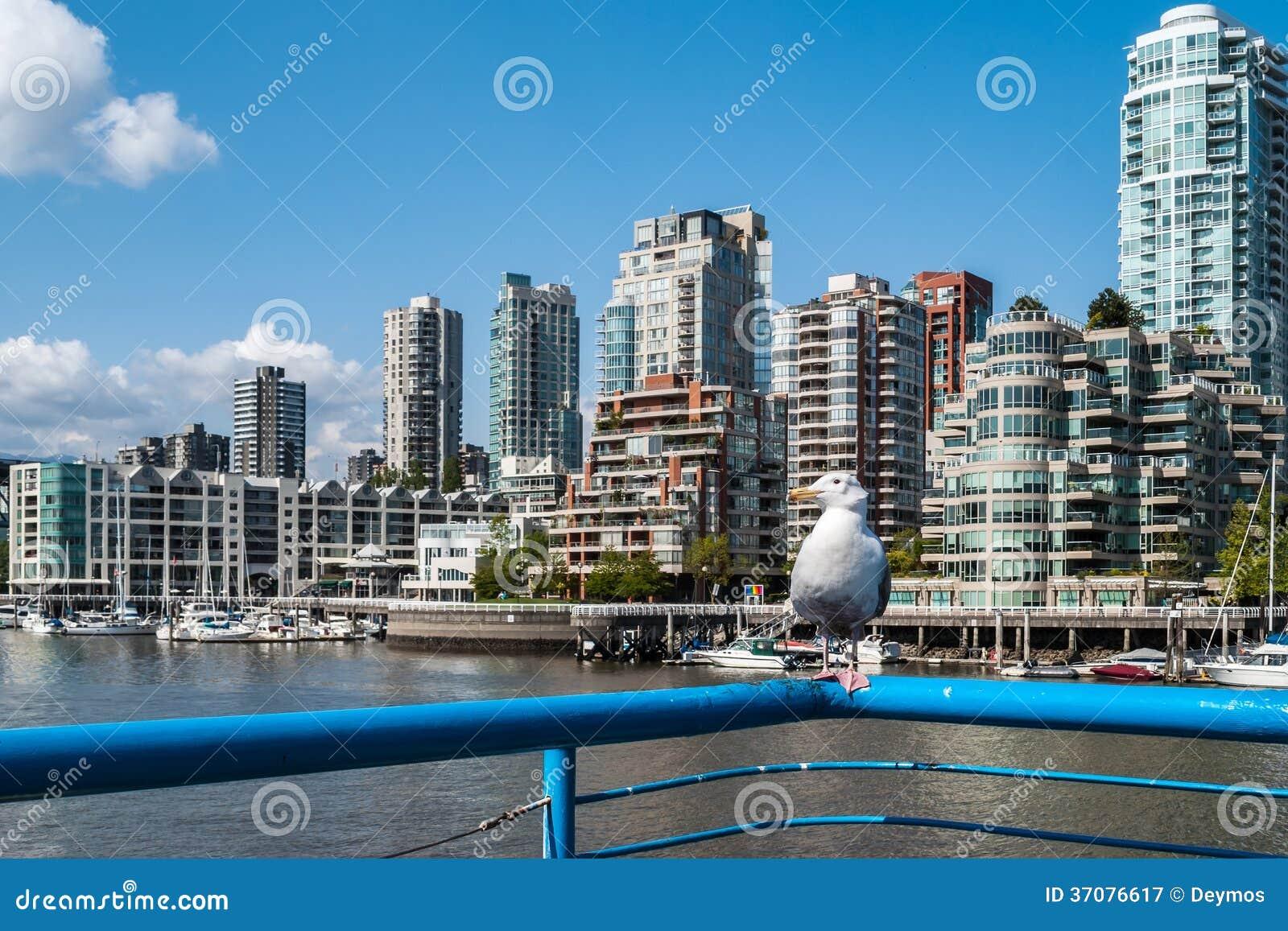 Download Seagulll Tyczenie Na Strażowym Poręczu Przed Yaletown, Vancouver Fotografia Editorial - Obraz złożonej z bogactwo, nowożytny: 37076617