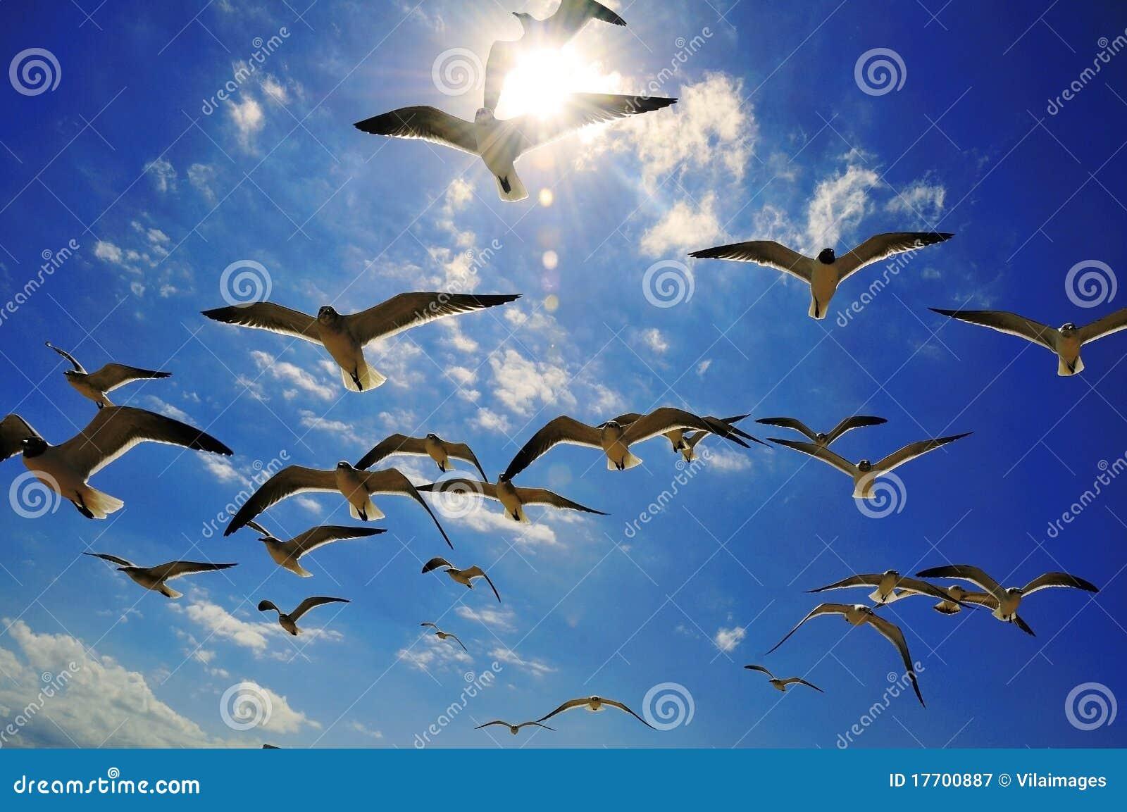 Seagulls światło słoneczne