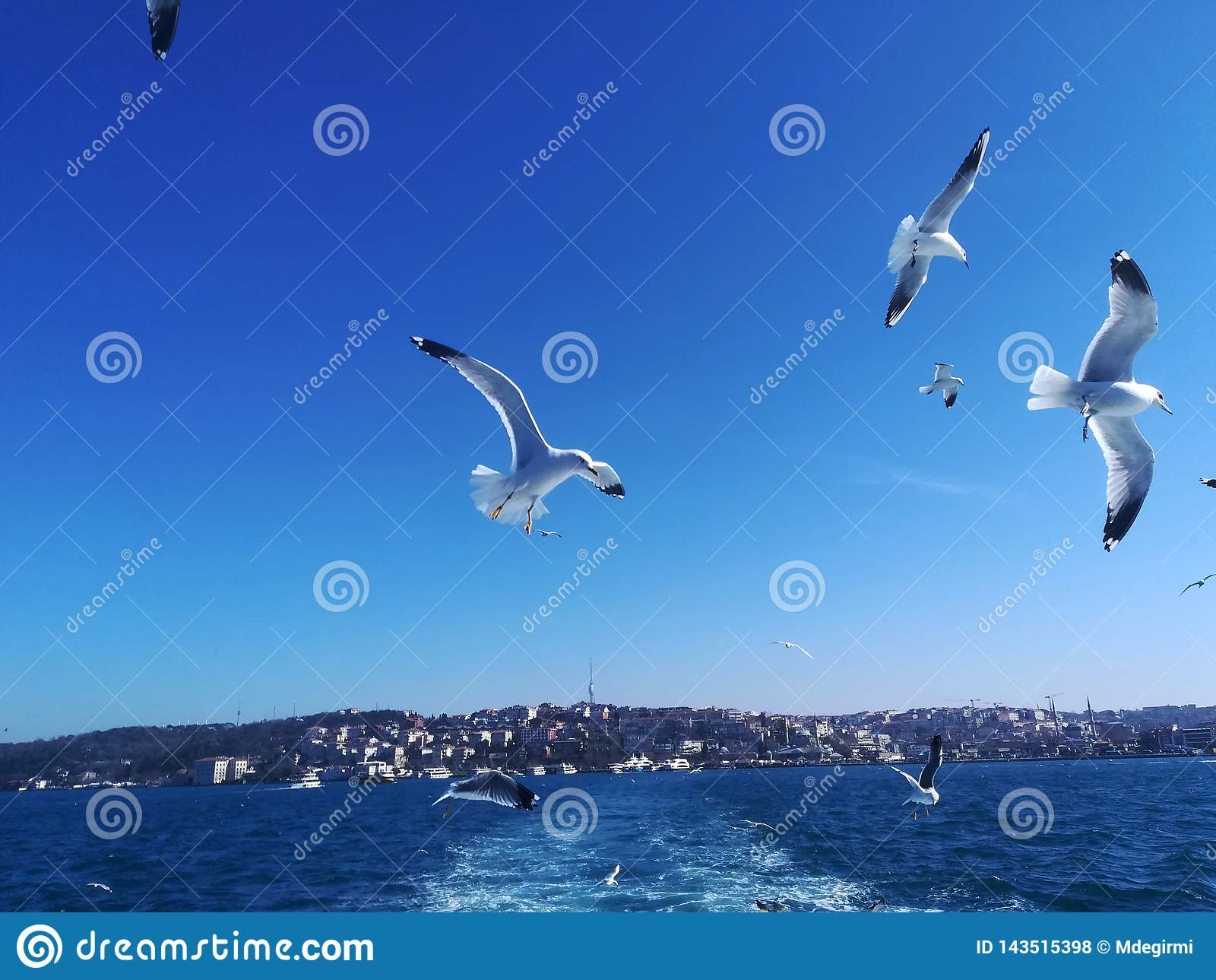 Seagulls μας ακολουθούν για τα τρόφιμα
