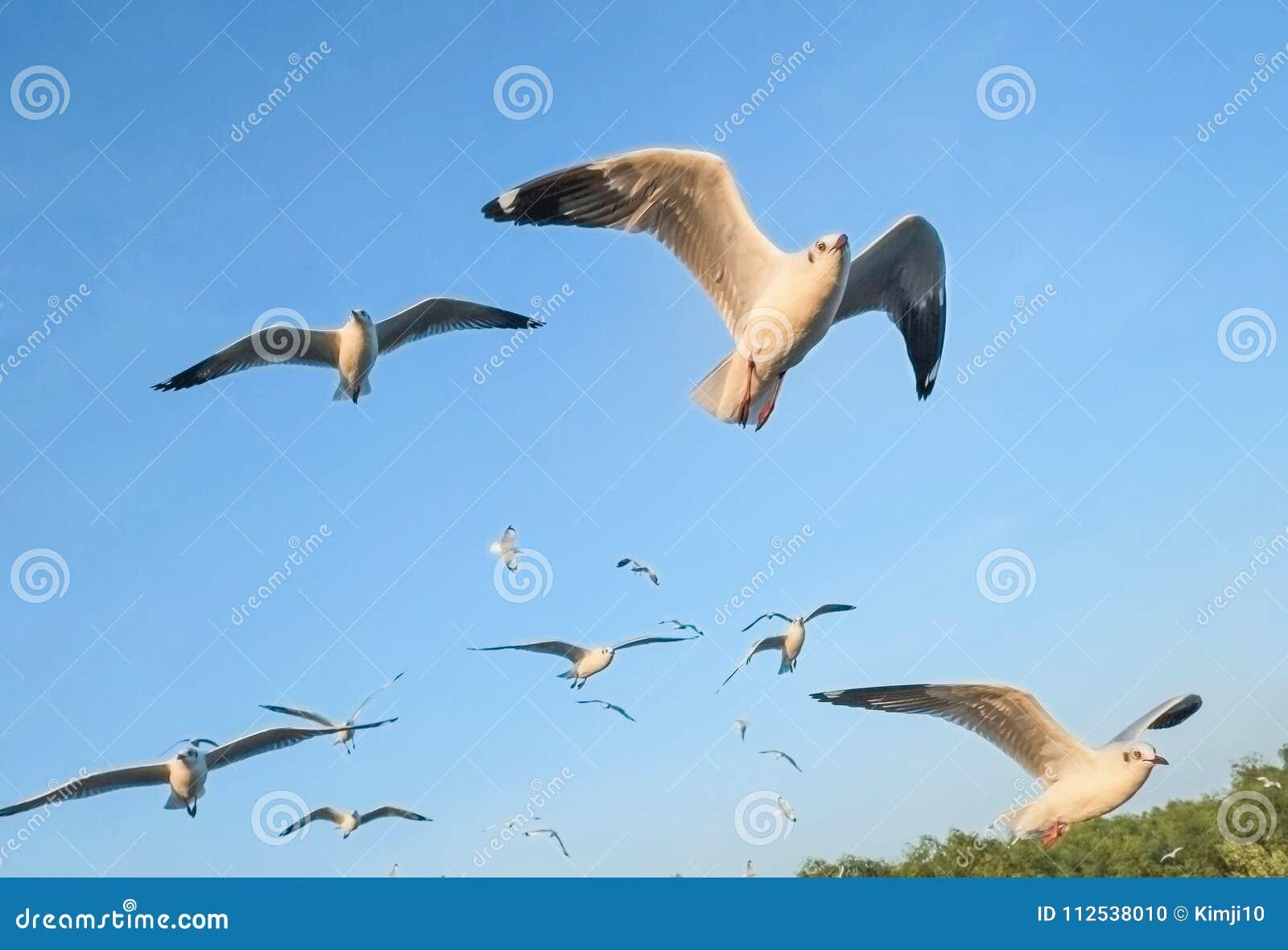 Seagulls μεταναστεύουν από τη Σιβηρία, τη Μογγολία, το Θιβέτ και την Κίνα για να κτυπήσουν το PU, Samut Prakan Ταϊλάνδη