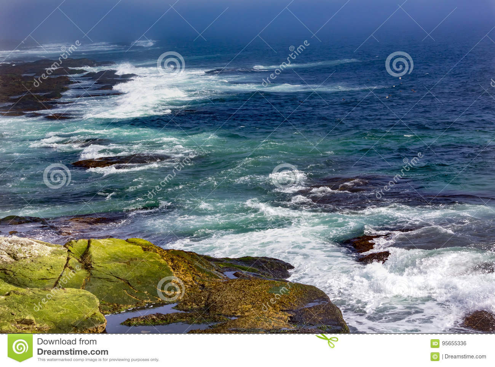 Seagulls μύγα και συντριβή κυμάτων ενάντια στην ακτή σε Beavertail, Jamest