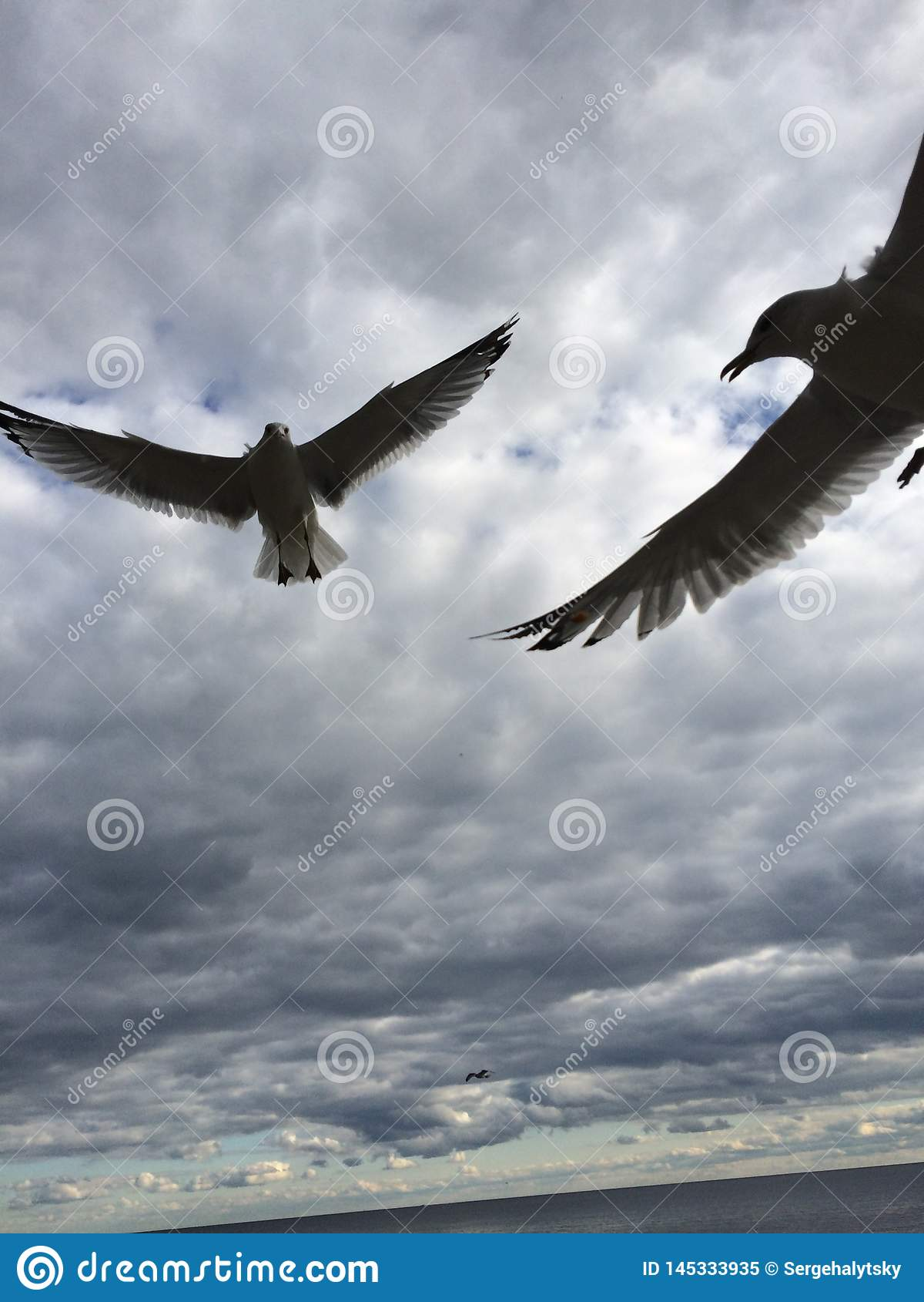Seagulls μύγα πέρα από τη λίμνη Οντάριο Καλοκαίρι 2017