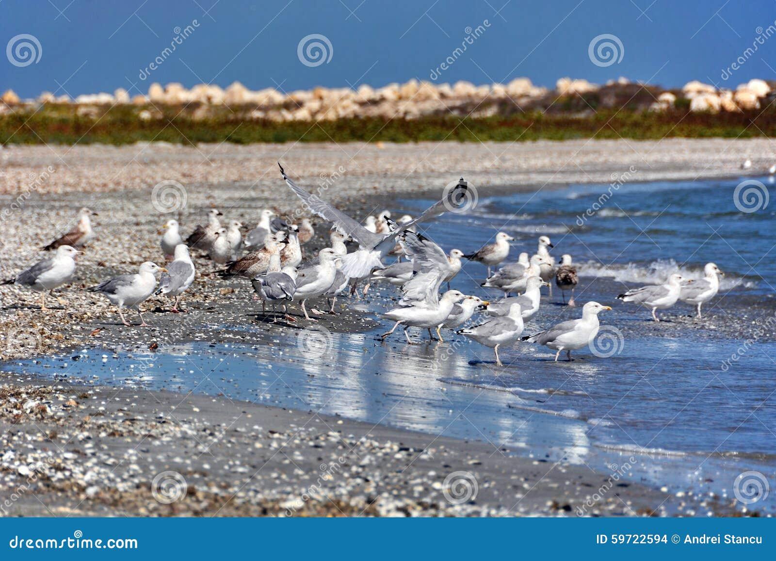 Seagulls στην παραλία