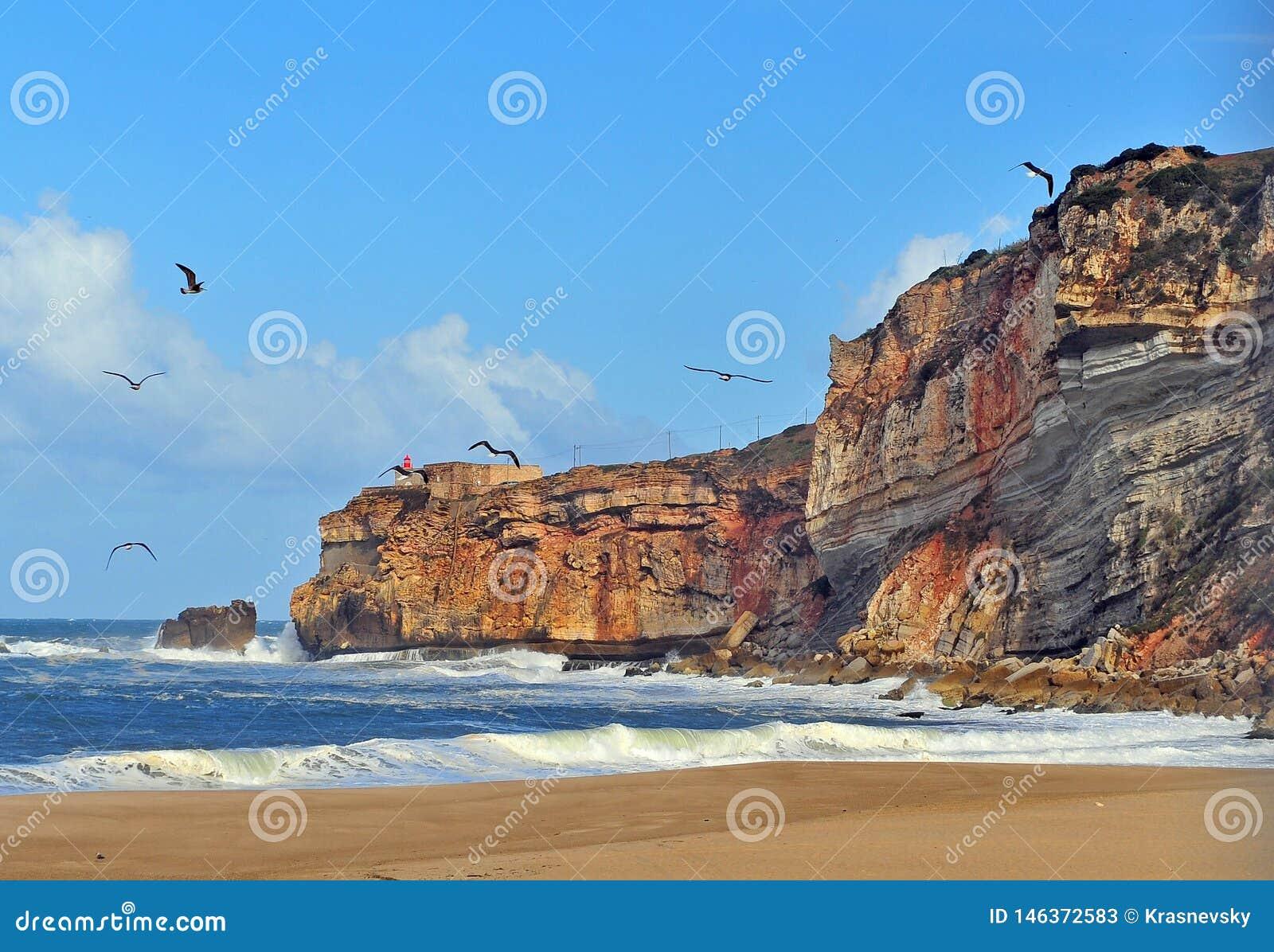 Seagulls on the beach of Nazare