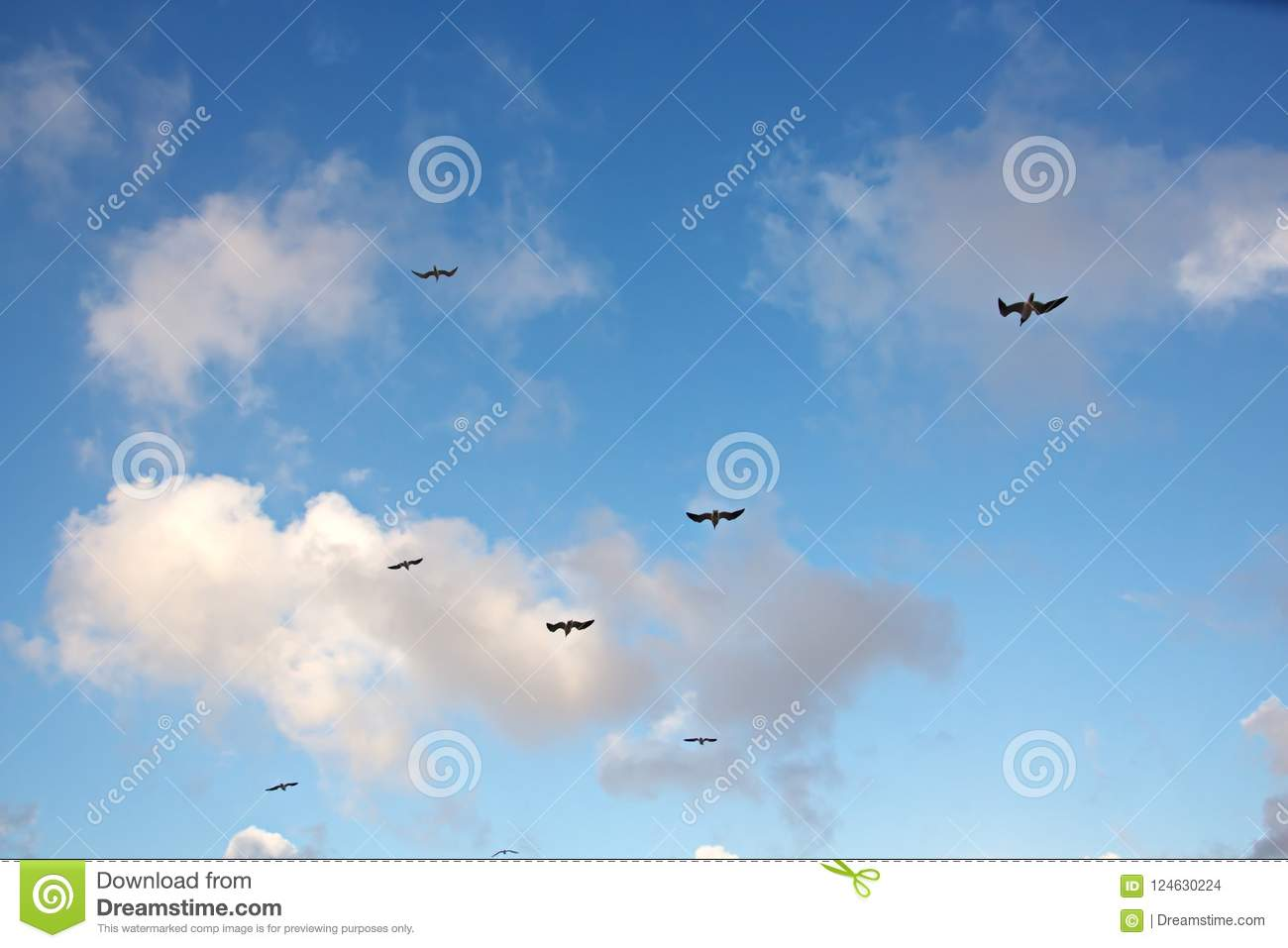 Seagulls and birds hovering in the sky against a background of white and colorful clouds and a coastline.