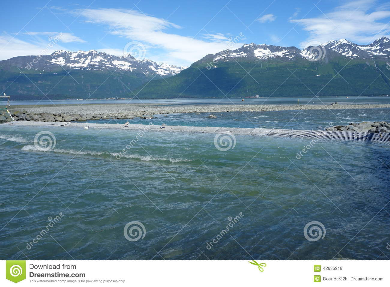 Seagulls eating salmon at a hatchery in alaska stock photo for Best time to fish in alaska