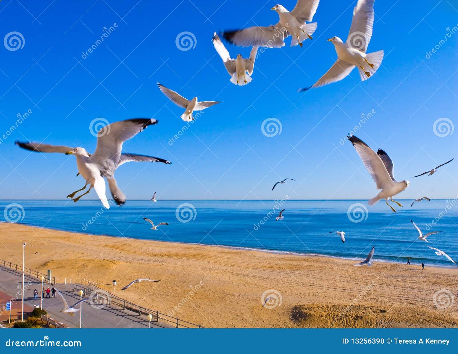 Seagulls Flying at Beach