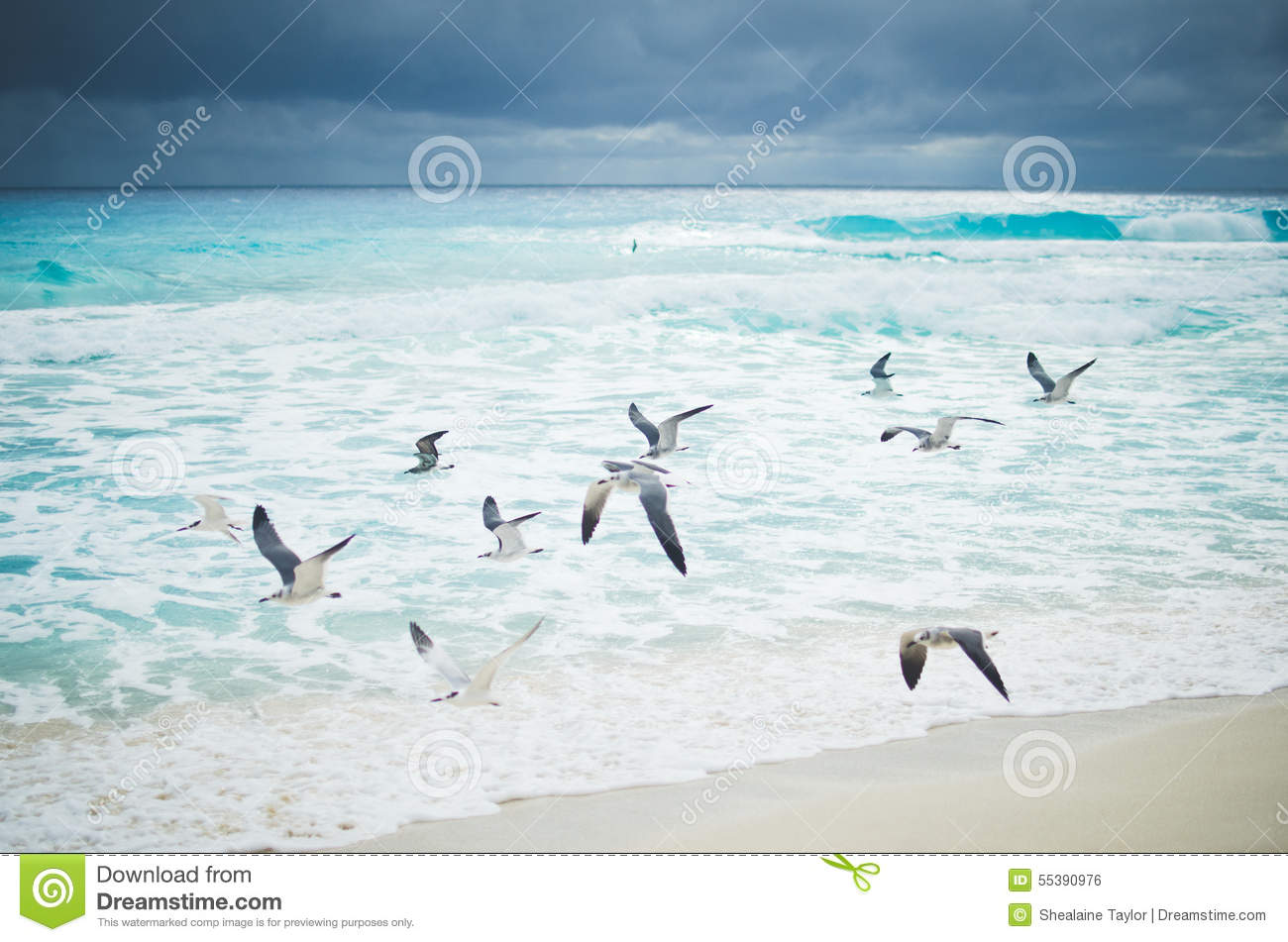 Seagulls Flying Over Ocean Waves Stock Photo - Image: 55390976