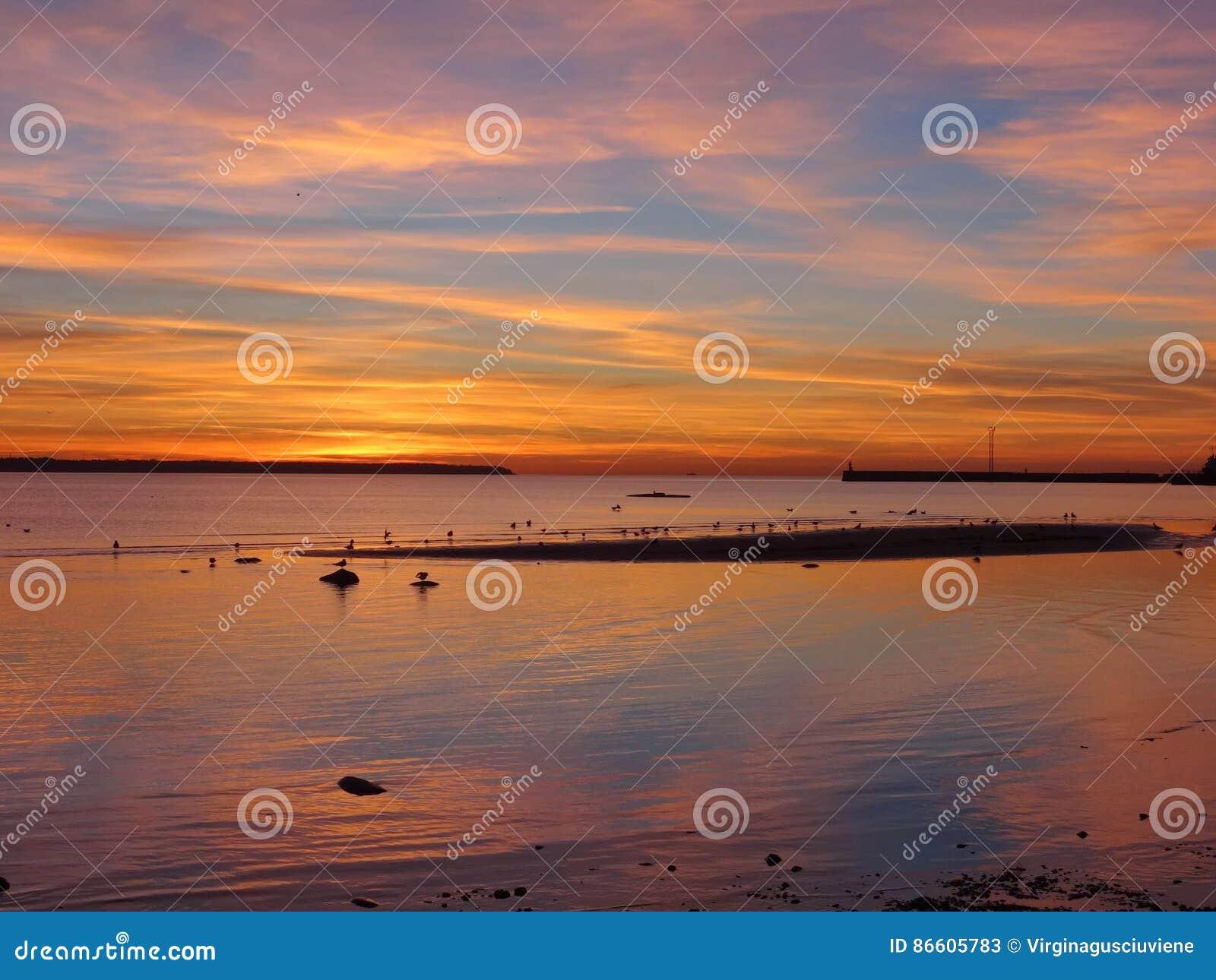 Seagulls i iseland och i brinnande himmel i Talin i Estland