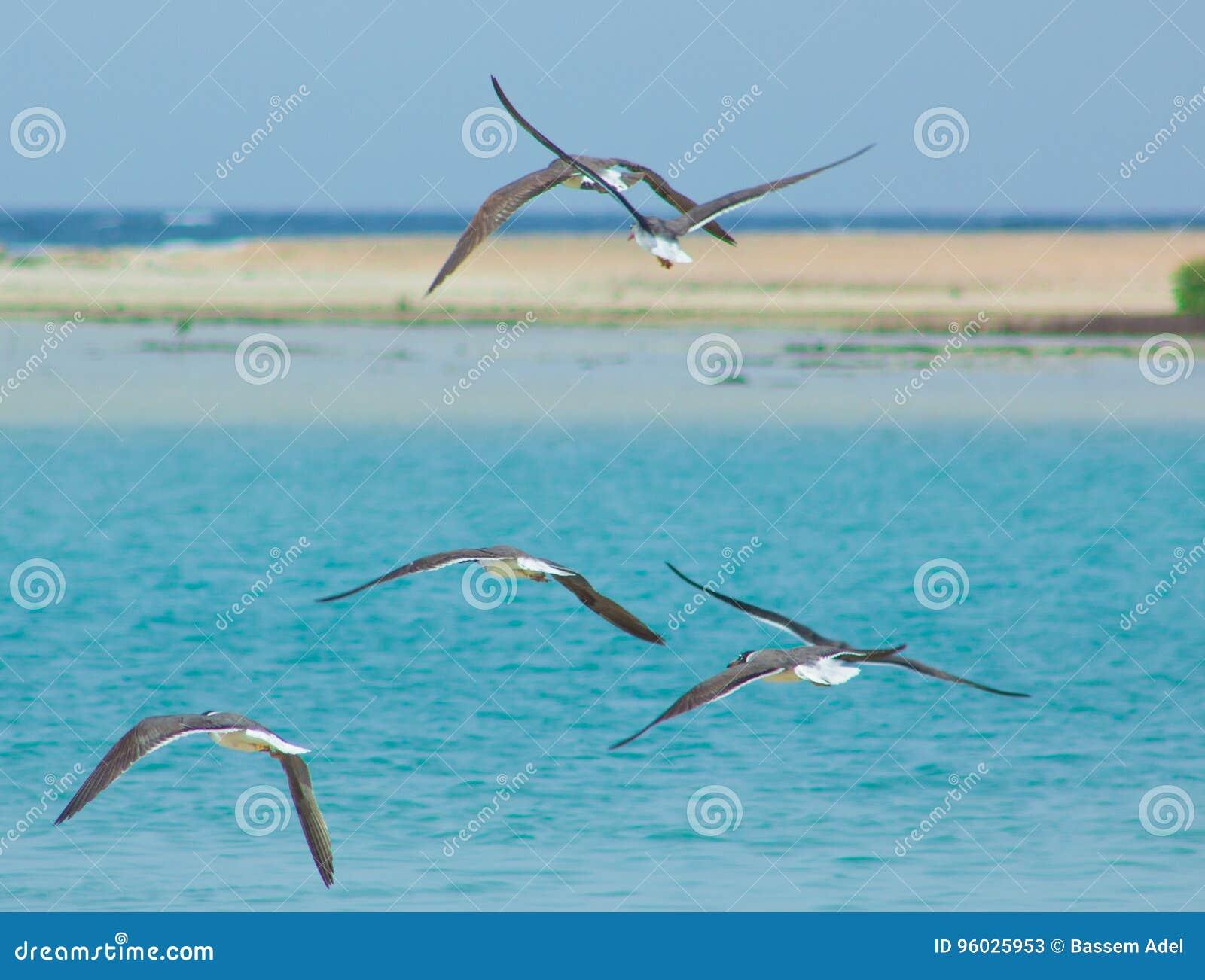 Seagulls lata i Łowi denną stroną z tłem ocean i niebieskie niebo