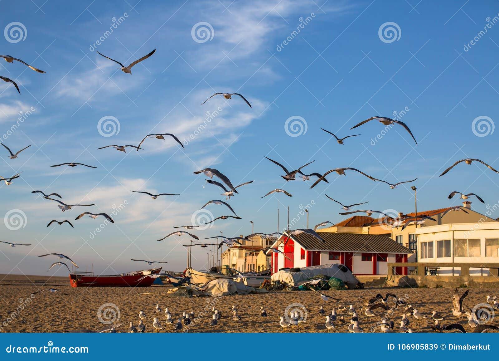 Seagulls na plaży w wiosce rybackiej, Atlantycki ocean Podróż