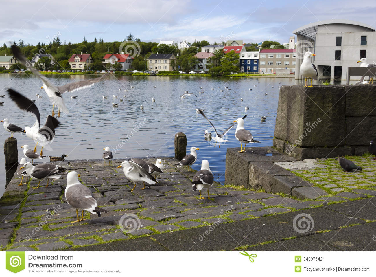 Seagulls Near A Pond In The Center Of Reykjavik Stock Photography Image 34997542