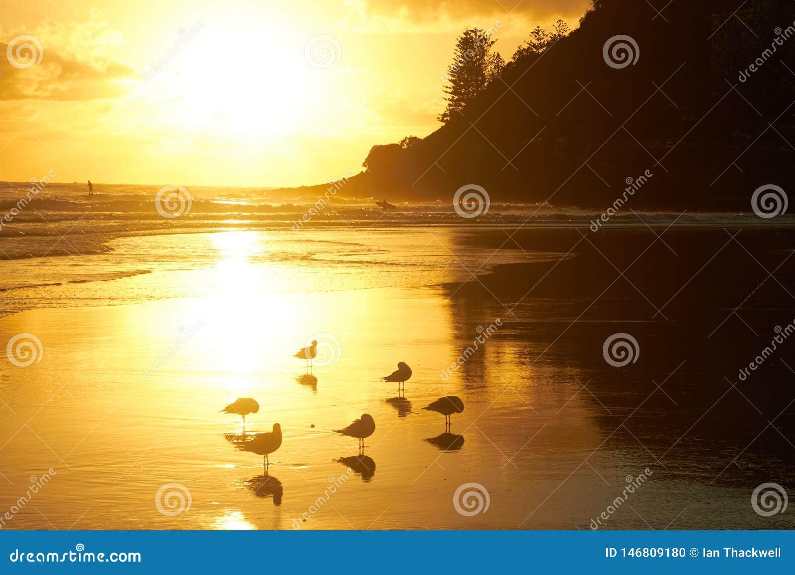 Seagulls på en härlig guld- strand på soluppgång