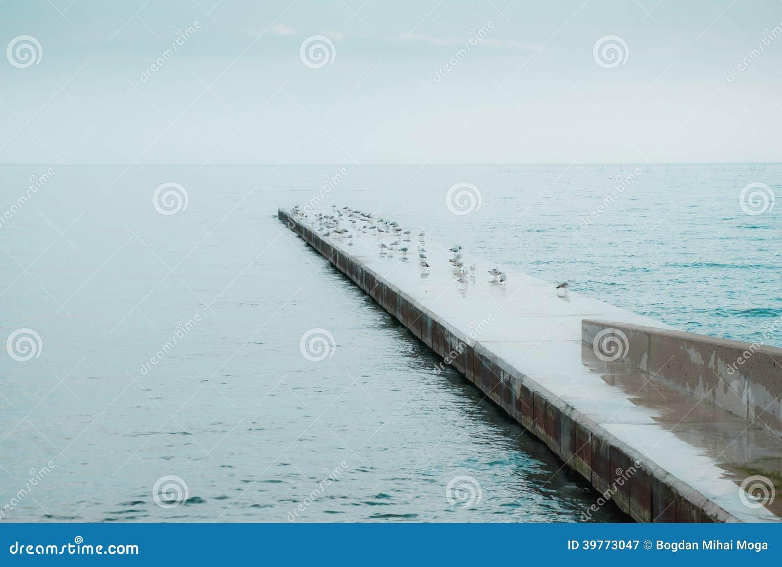 Seagulls på konkret skeppsdocka på havet