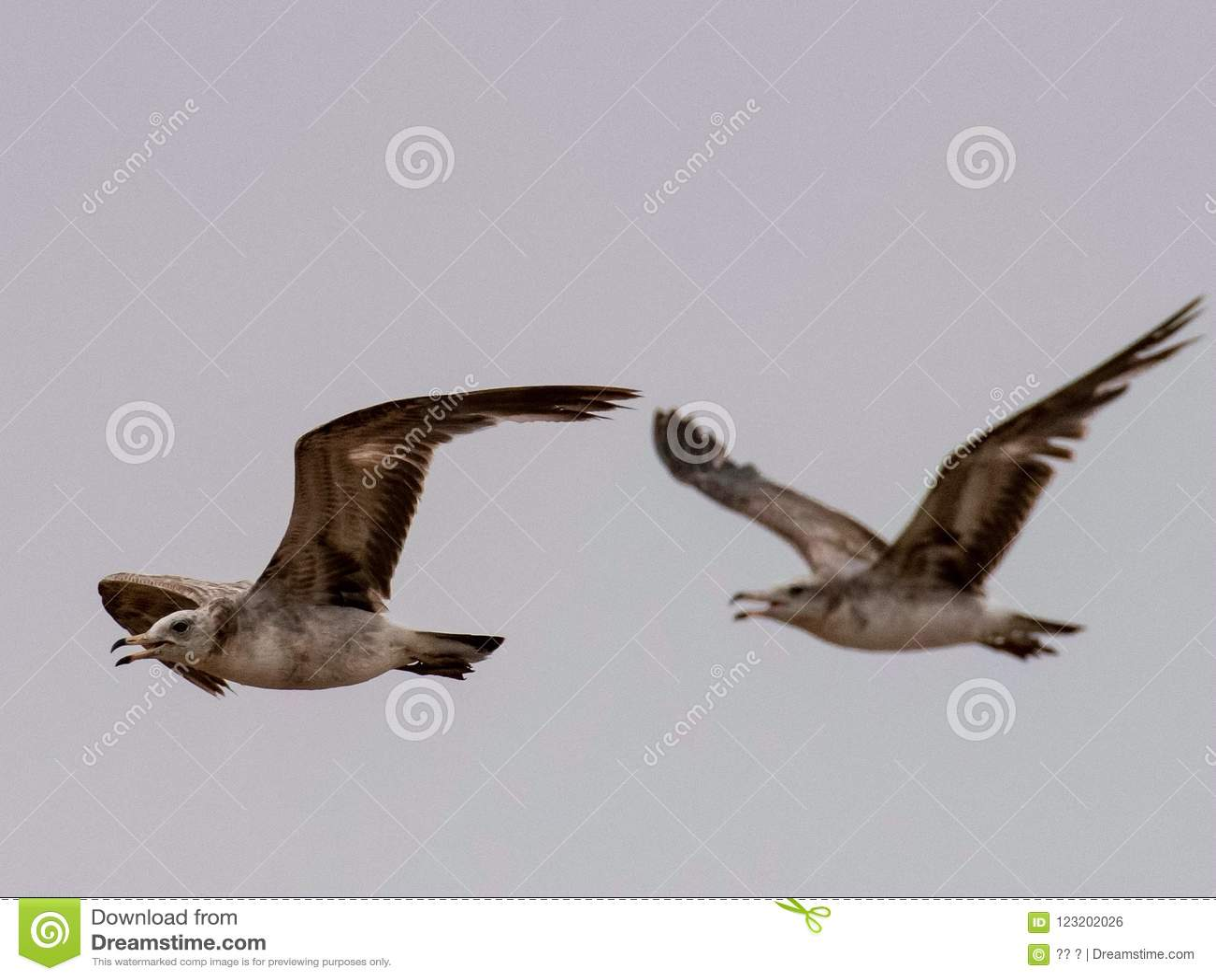 Seagulls And Petrel On The Edge Of Bohai Stock Photo - Image of