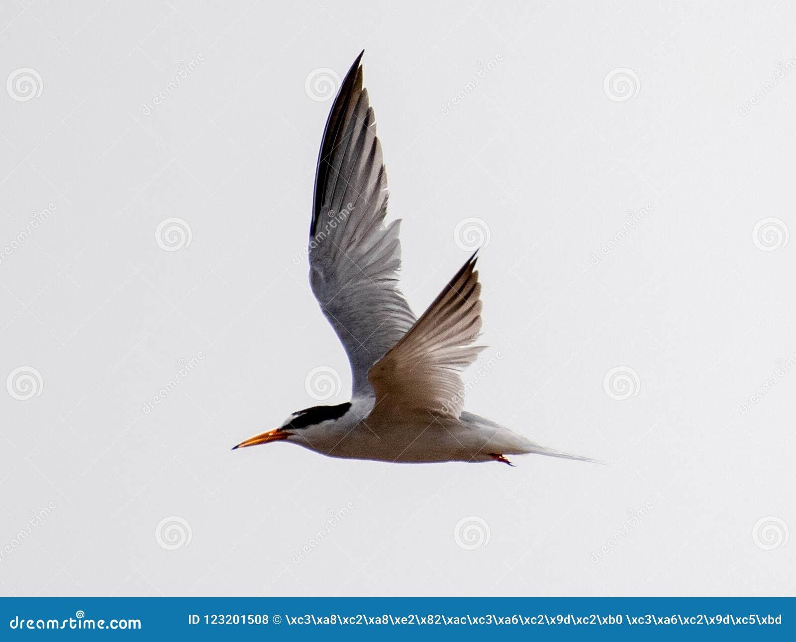 Seagulls And Petrel On The Edge Of Bohai Stock Photo - Image of hand