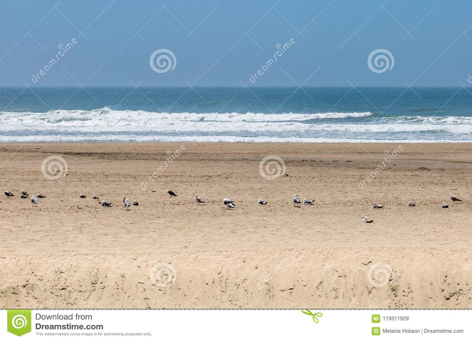 Seagulls On The Sand At Ocean Beach San Francisco Stock Image