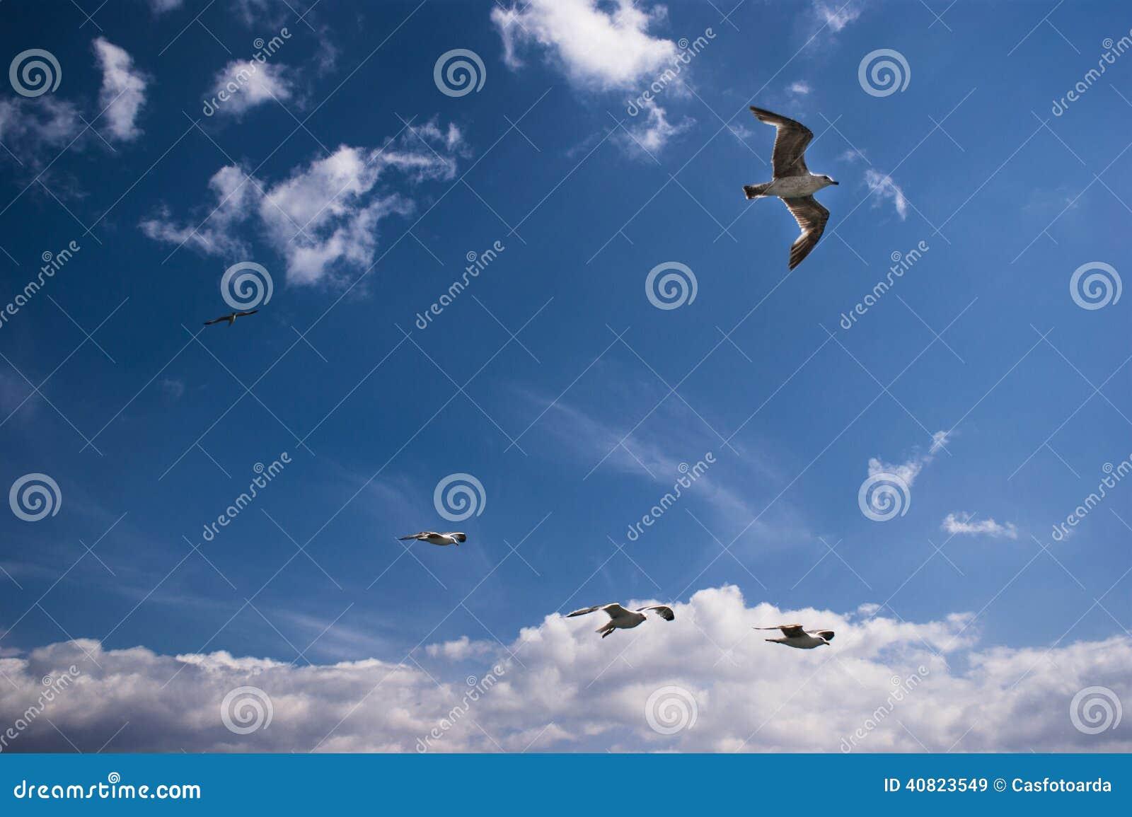 Seagulls are on sky