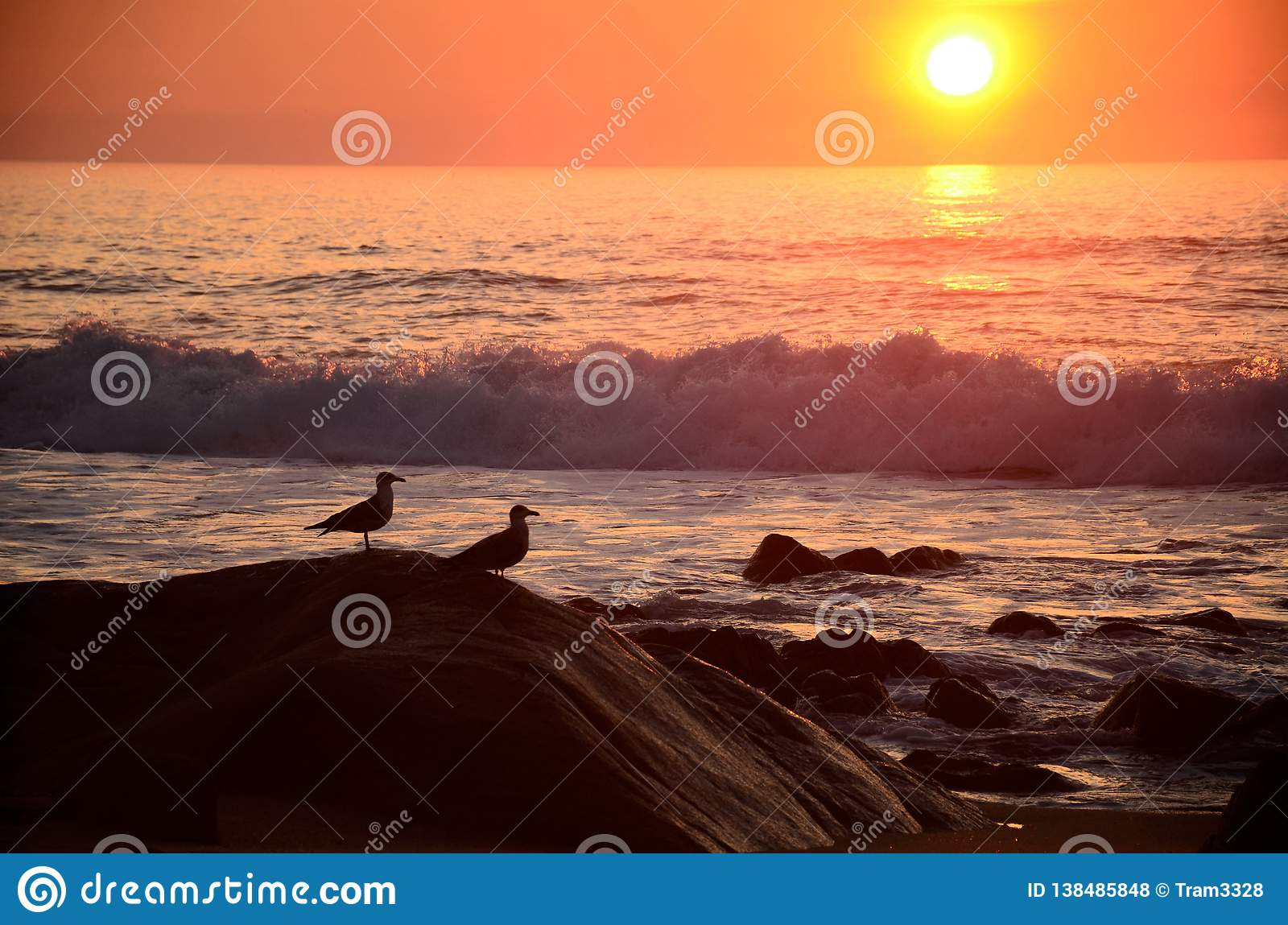 Seagulls on the stones at the shore of the ocean at the sunset.
