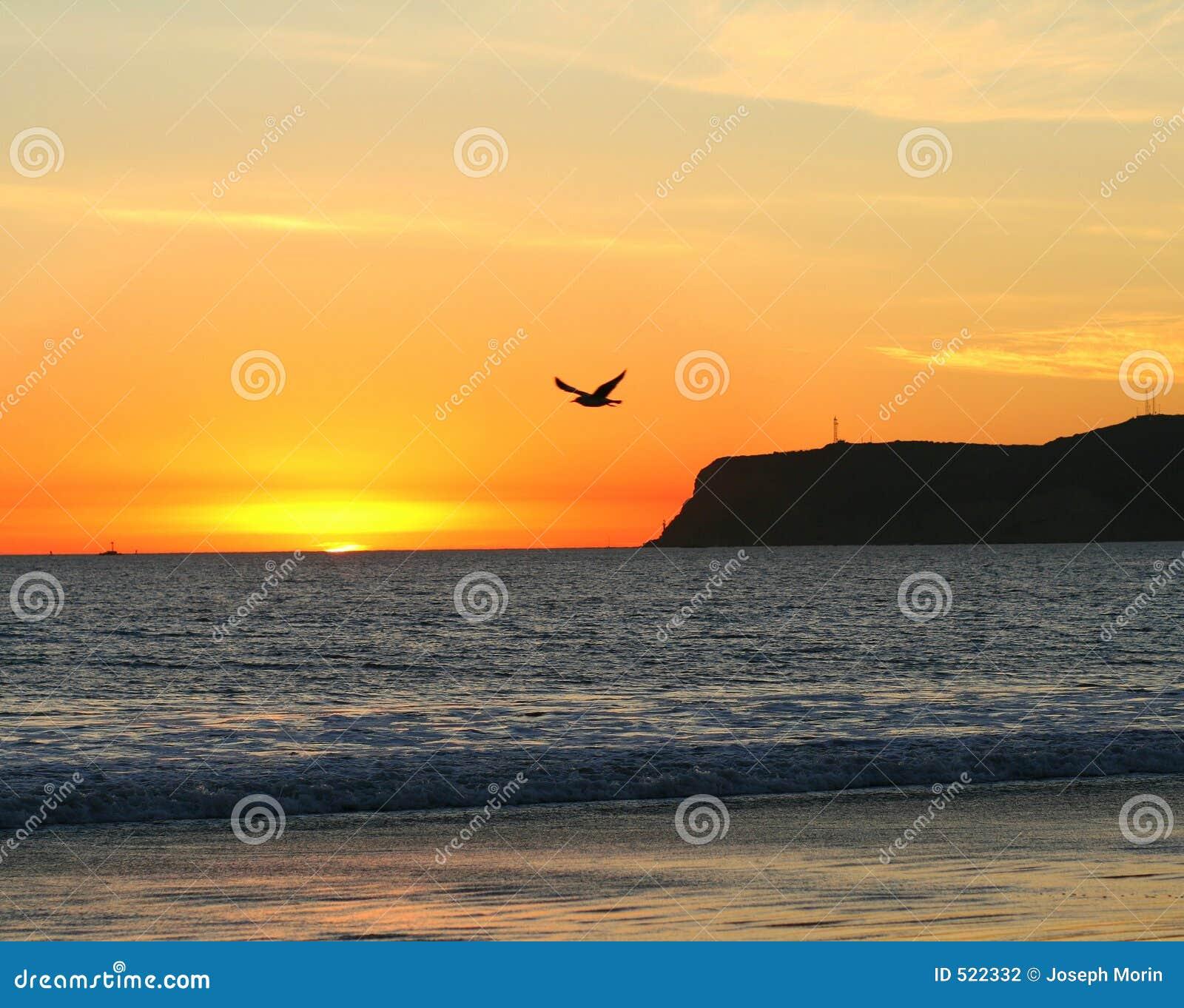 Seagullsolnedgång