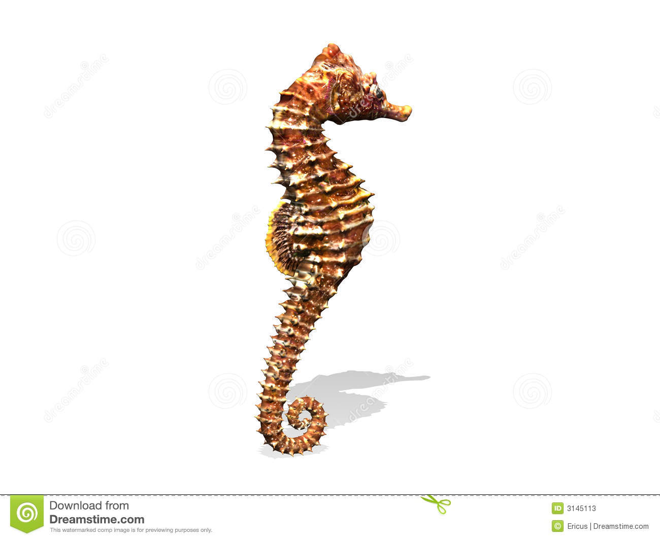 Seahorse Stock Illustration. Illustration Of Seahorse