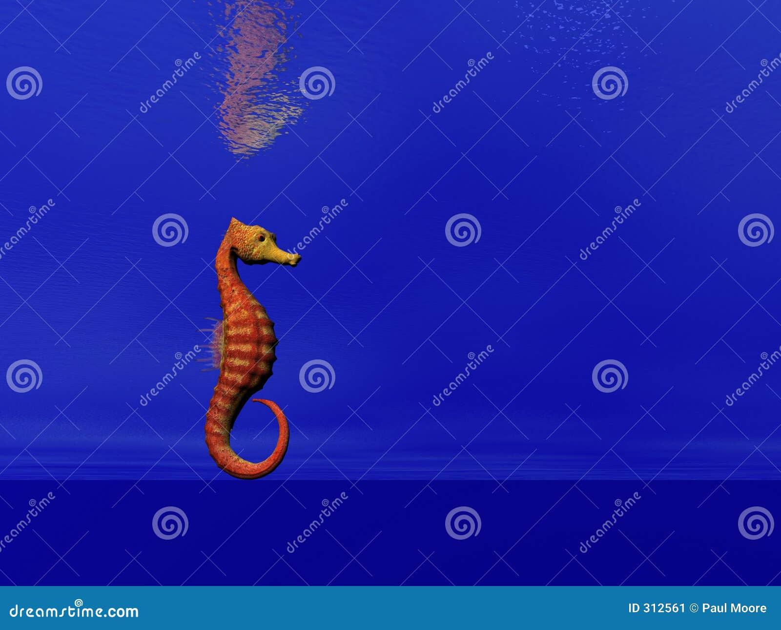 Seahorse due