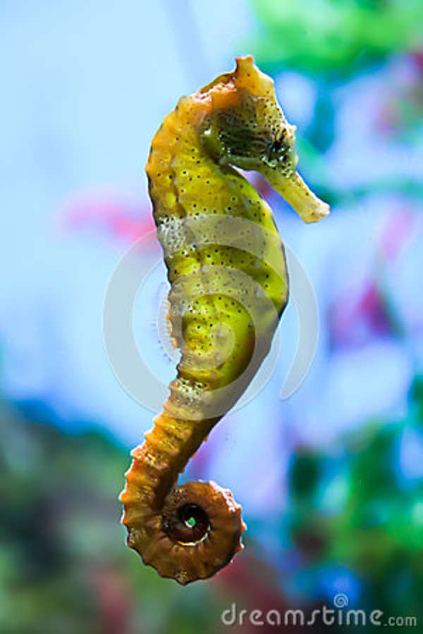 Marine Pets : . Marine animals and amphibians. The underwater world. The marine ...