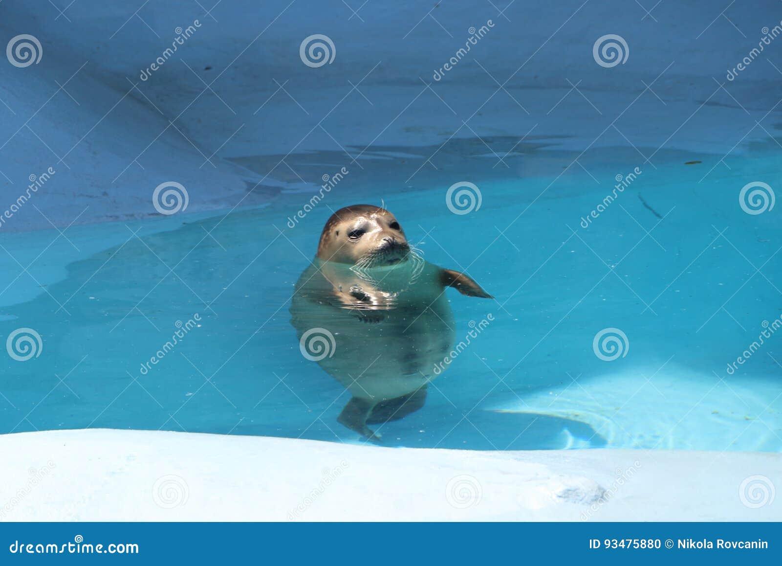 Seal in pool