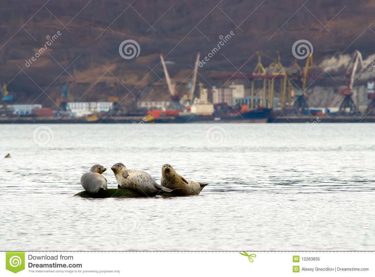 Seal in the port
