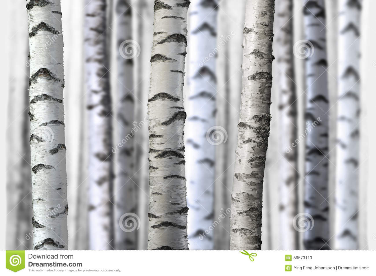 Unique Seamless birch trees stock image. Image of sparse, white - 59573113 BA29