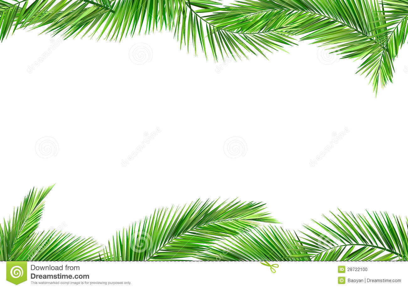 Seamless Coconut Leaves Stock Photo Image 28722100