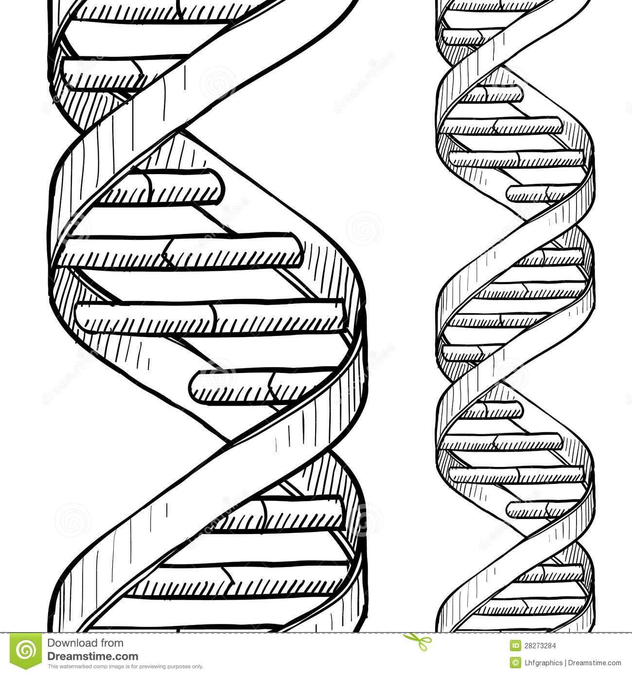 Seamless Dna Double Helix Sketch Stock Vector