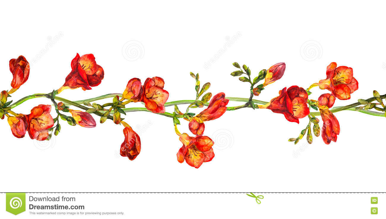 Red Flower Line Drawing : Seamless floral border stripe with flower of red freesia