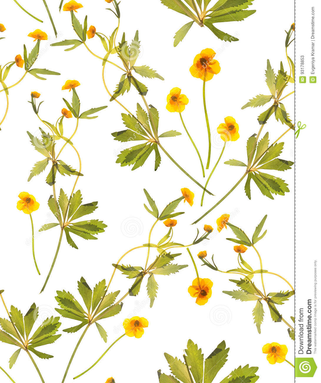Seamless floral pattern with yellow flowers